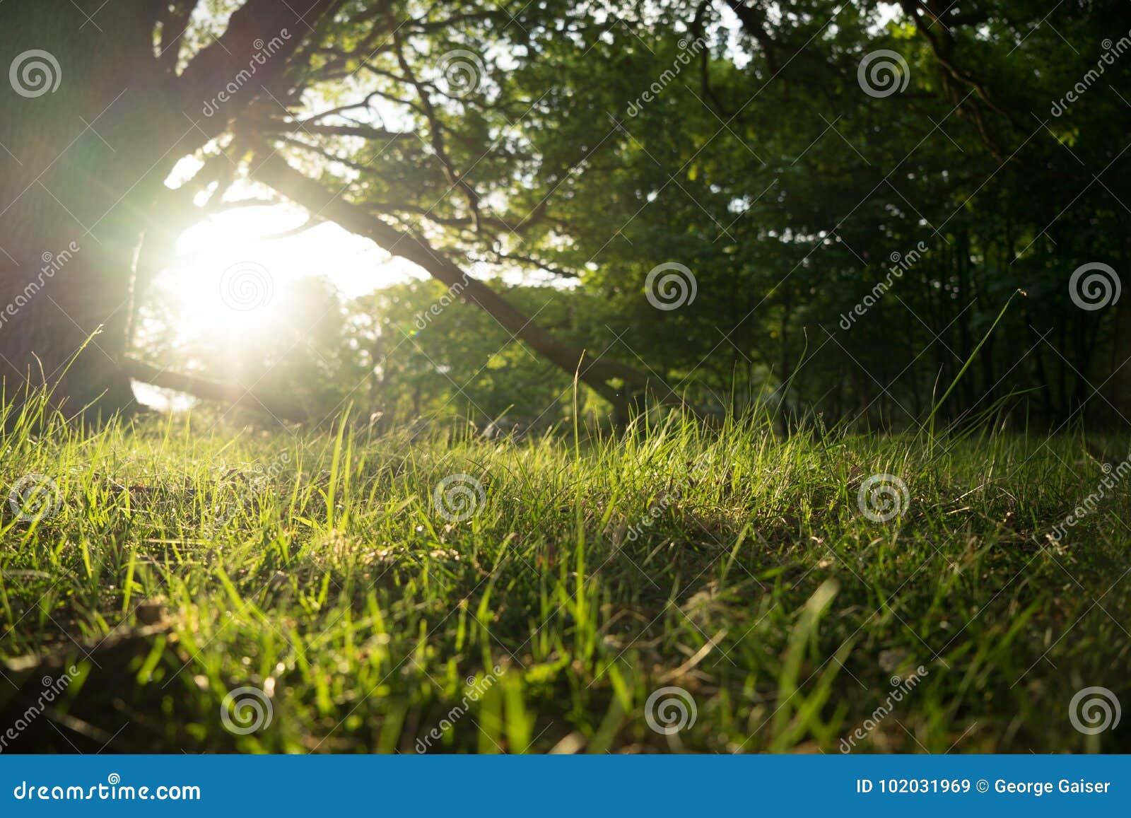 Lever de soleil de forêt