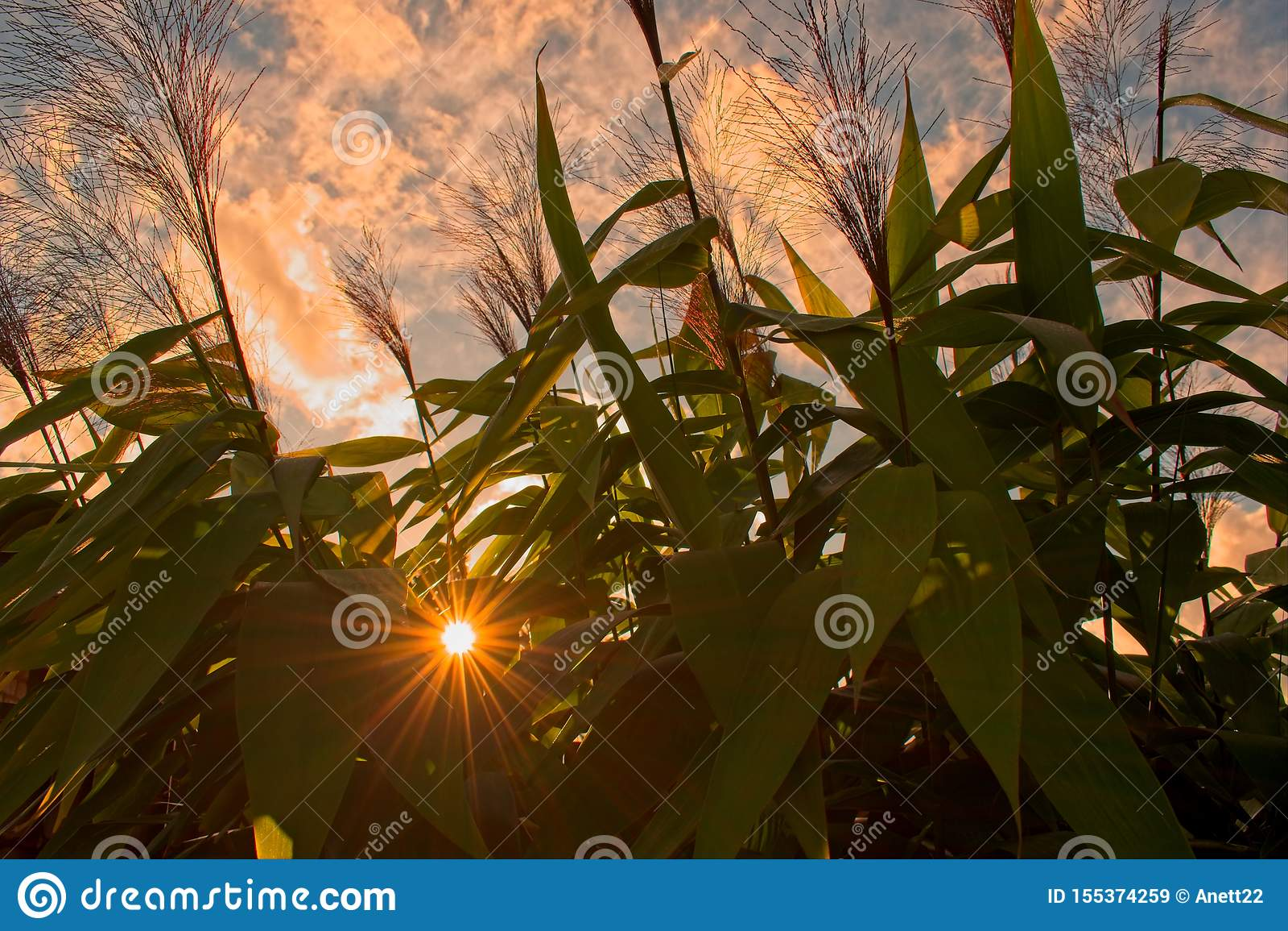 Lever de soleil par des plantes tropicales