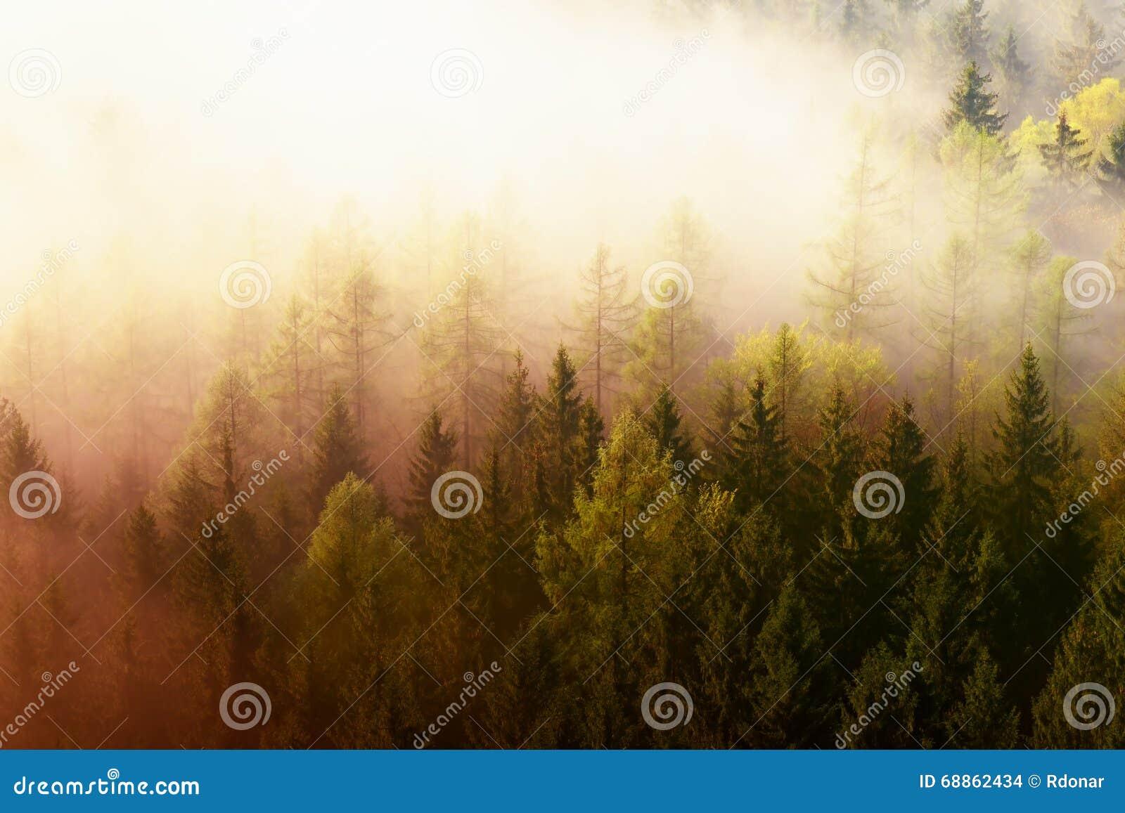 Lever de soleil rêveur fantastique au-dessus de la vallée profonde cachée les montagnes rocheuses