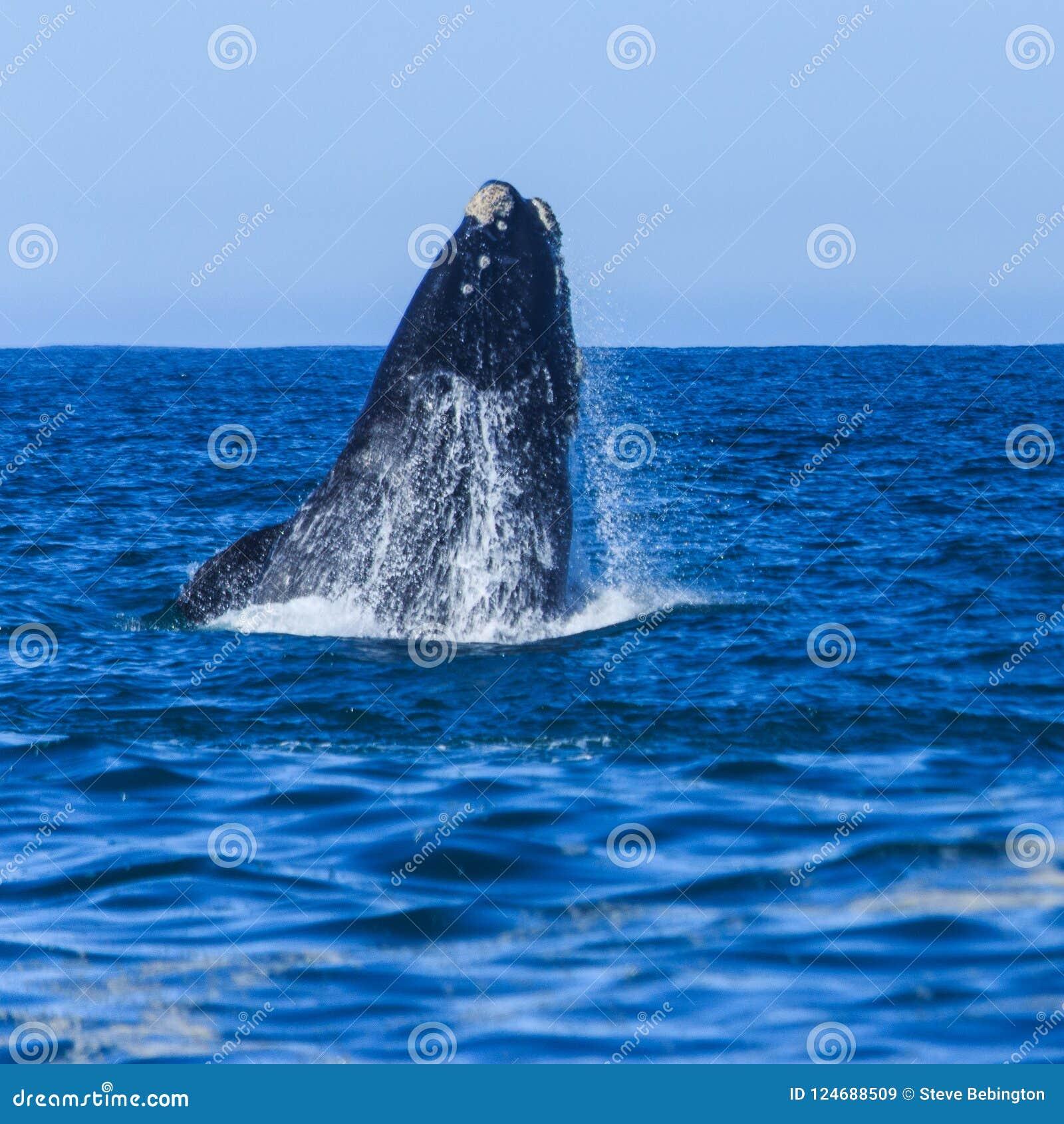Leviathan de afluência