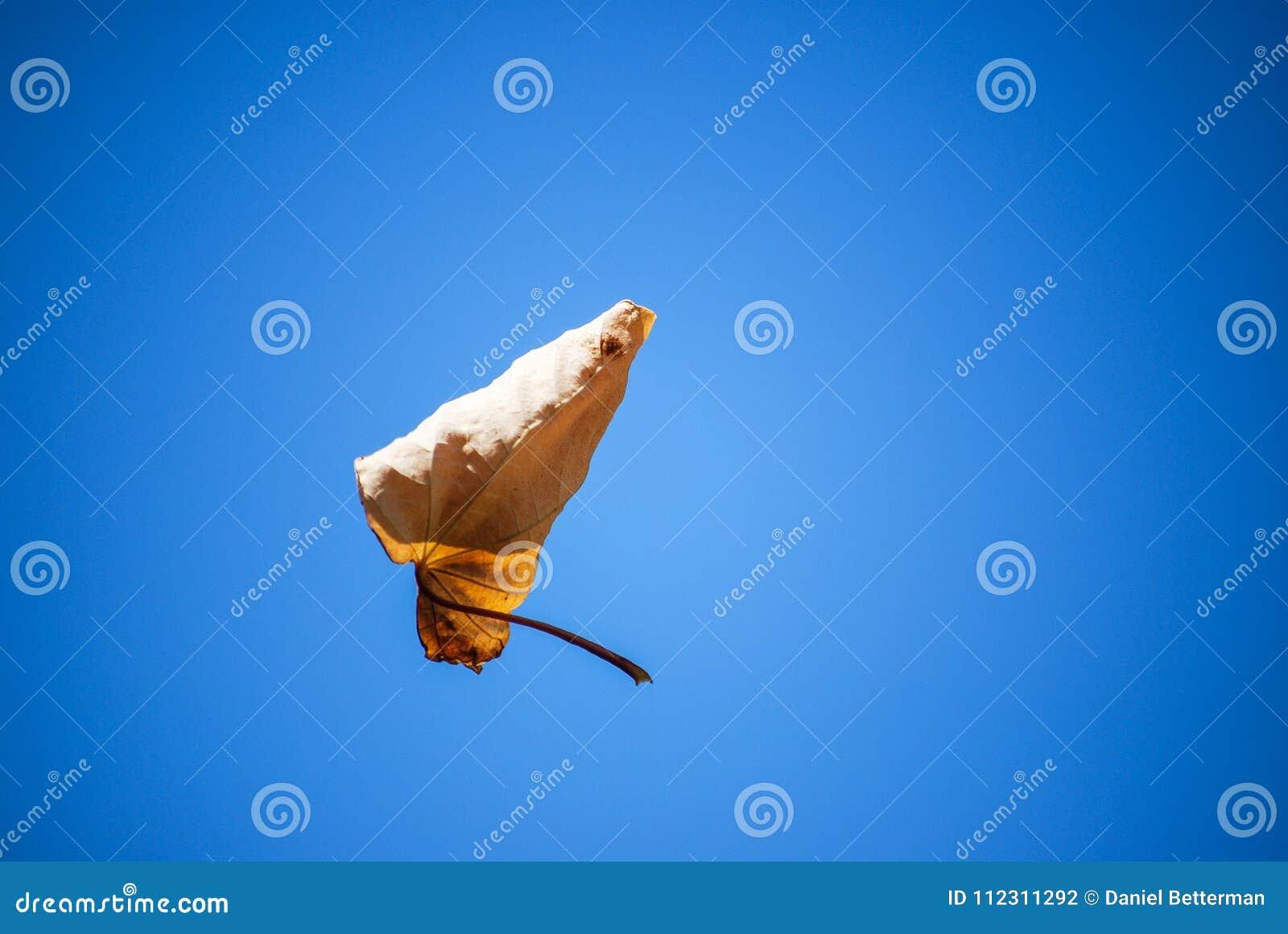 Levitating liść