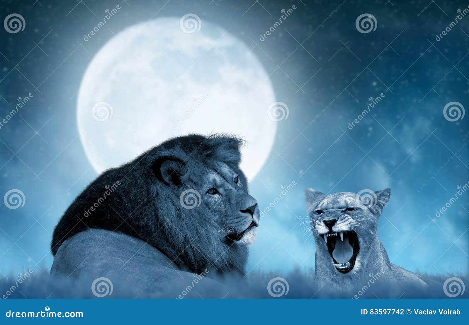 Lew i lwica na sawannie