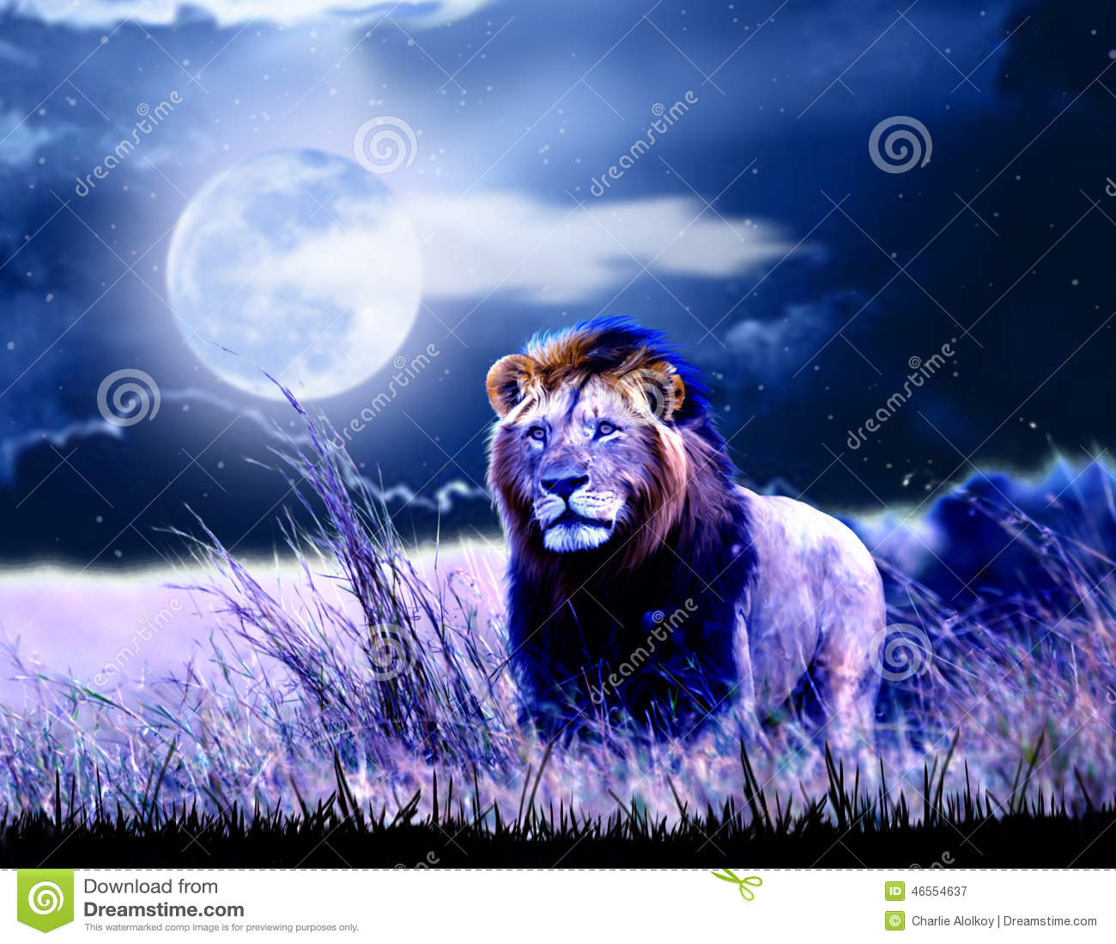 Lew przy nocą