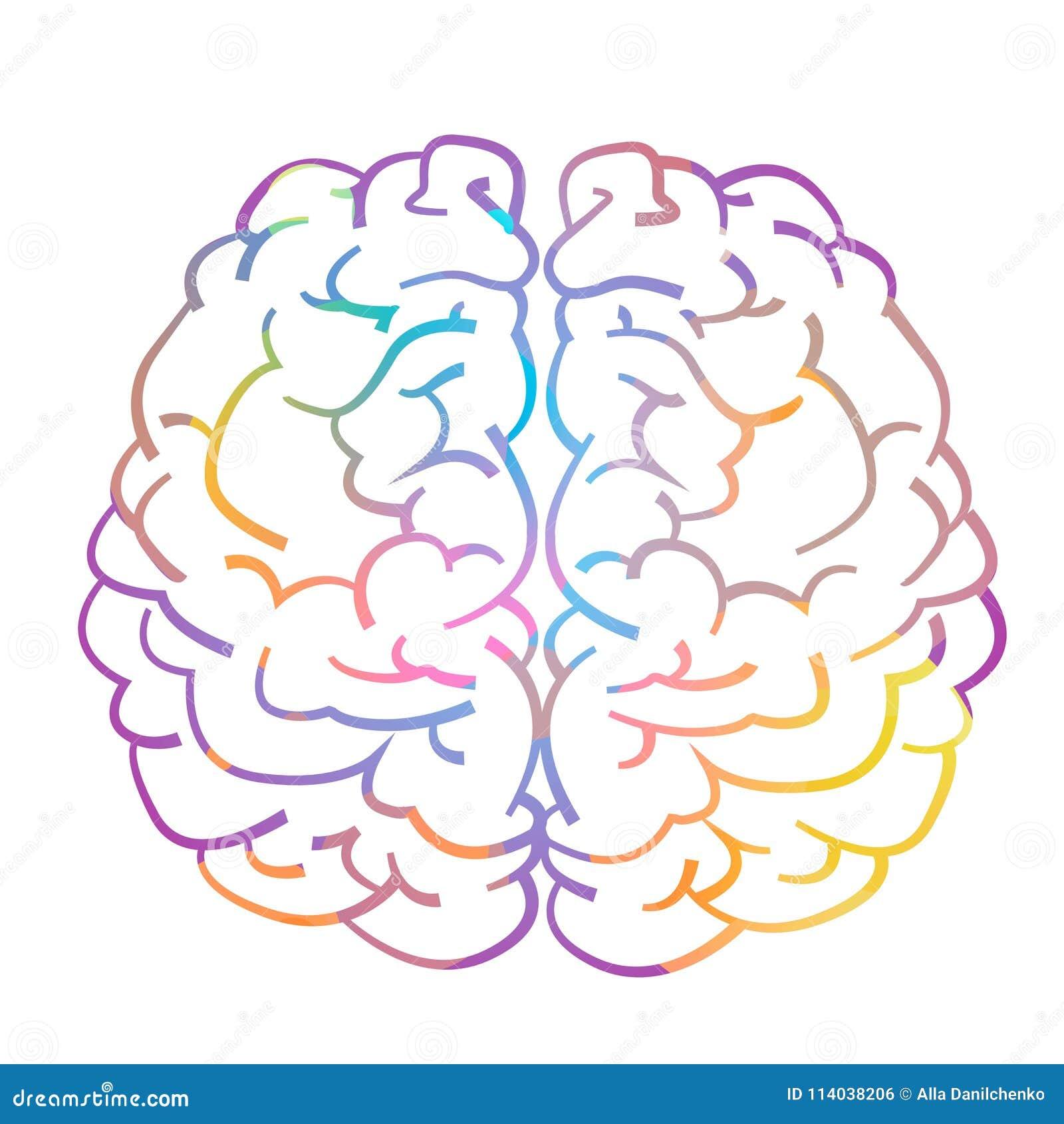 Lewy i prawy hemisfera ludzki mózg