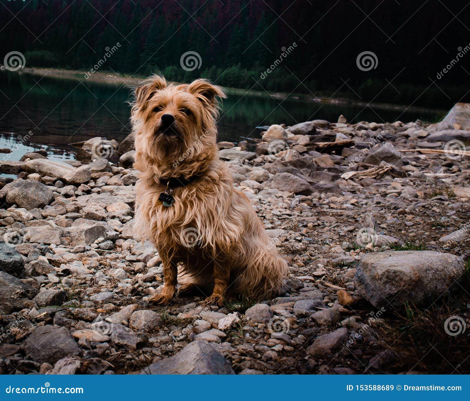 Lexy na een vroege ochtendonderdompeling in het meer ziet inquisitively eruit alsof om wat nu te zeggen
