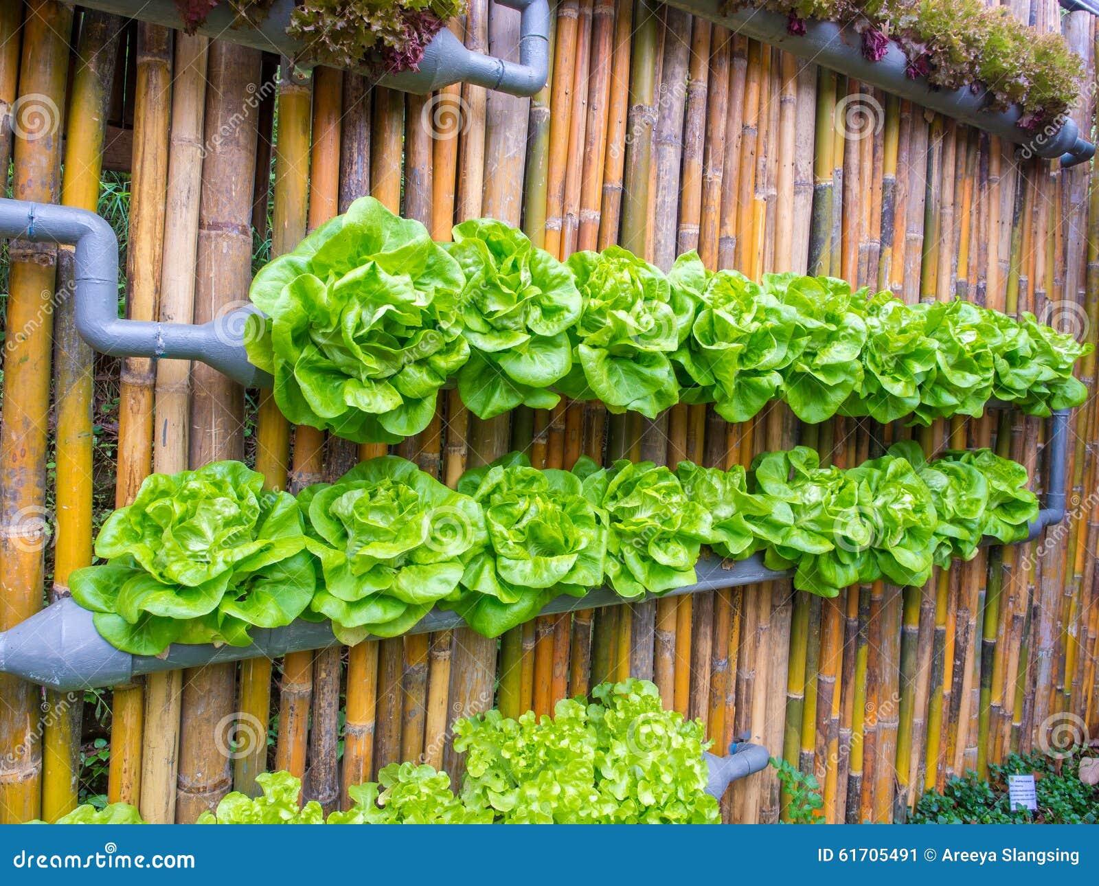 L Gume Dans Le Jardin D Cor De Verticale De Mur Photo