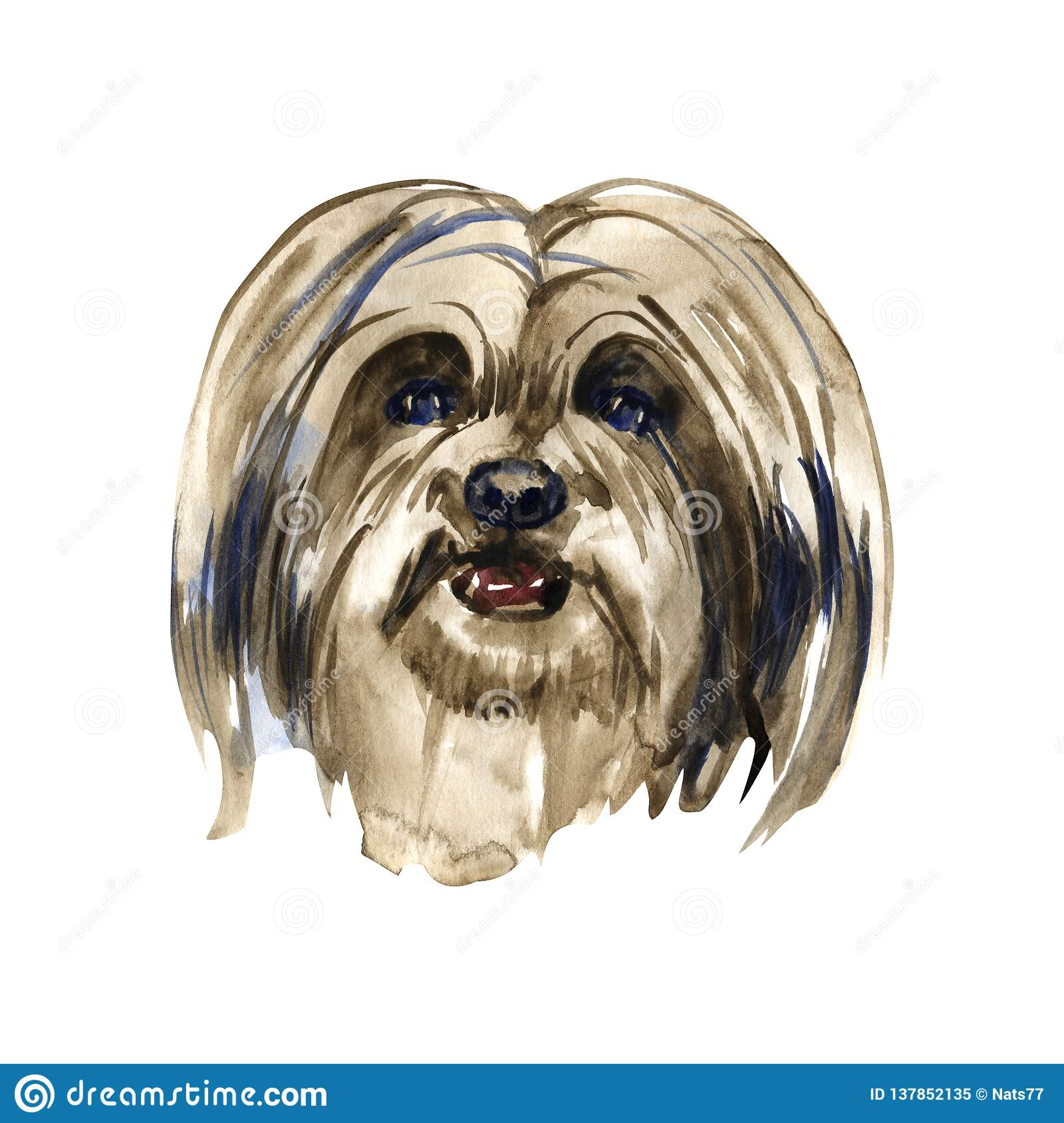 Lhasa Apso Hand Painted Isolated Watercolor Dog Stock