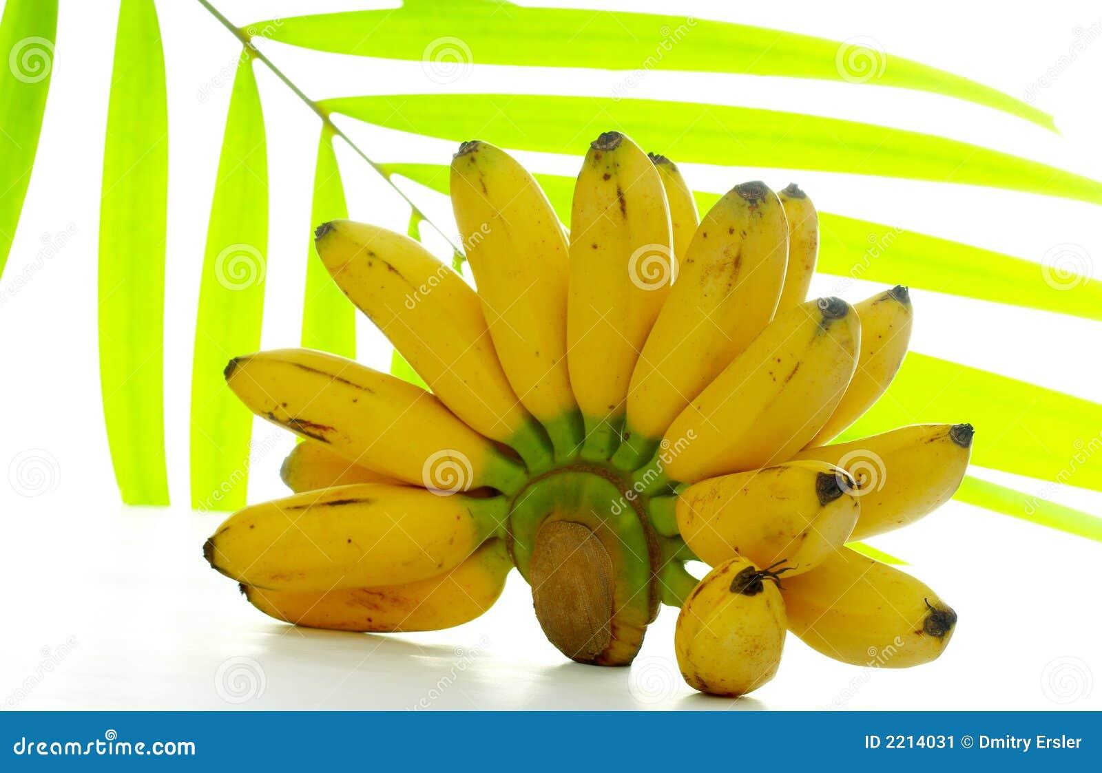 Liść bananów palma