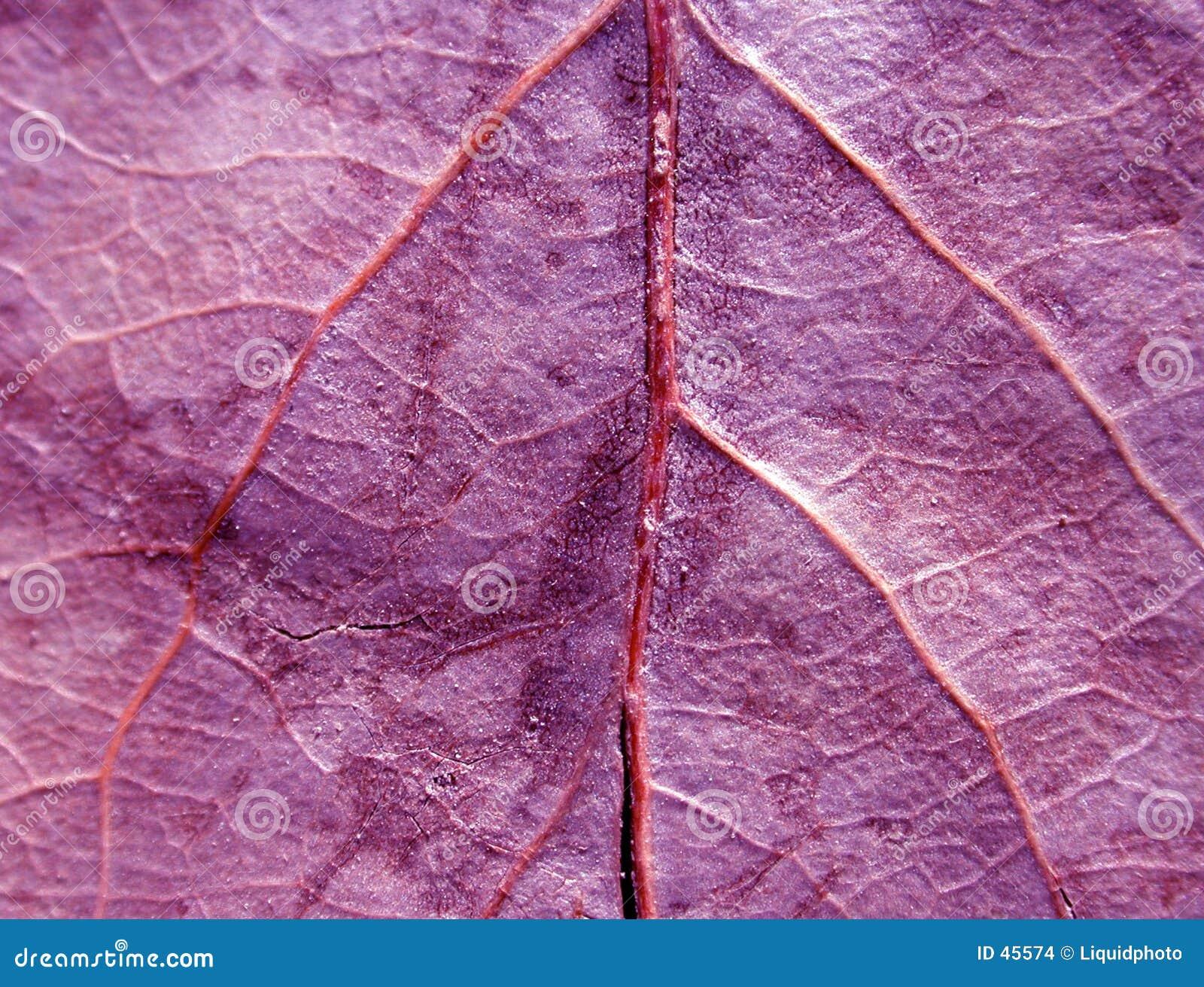 Liść fioletowego konsystencja