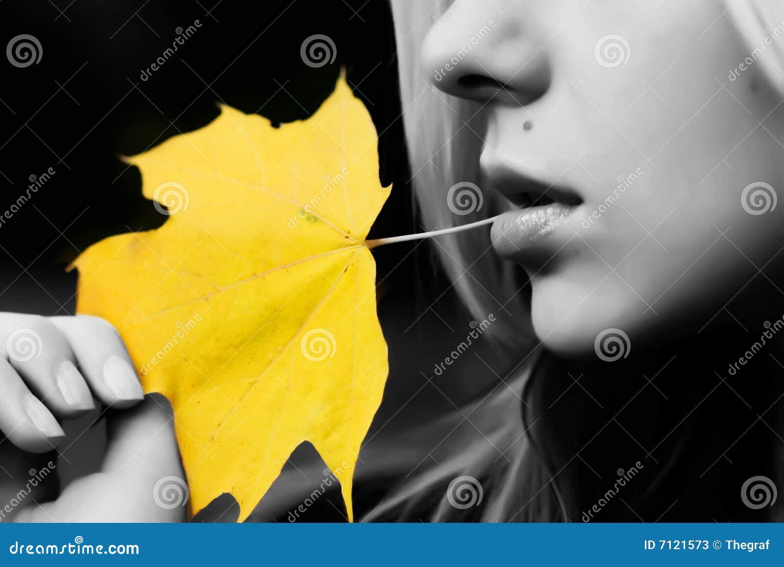 Liść kolor żółty