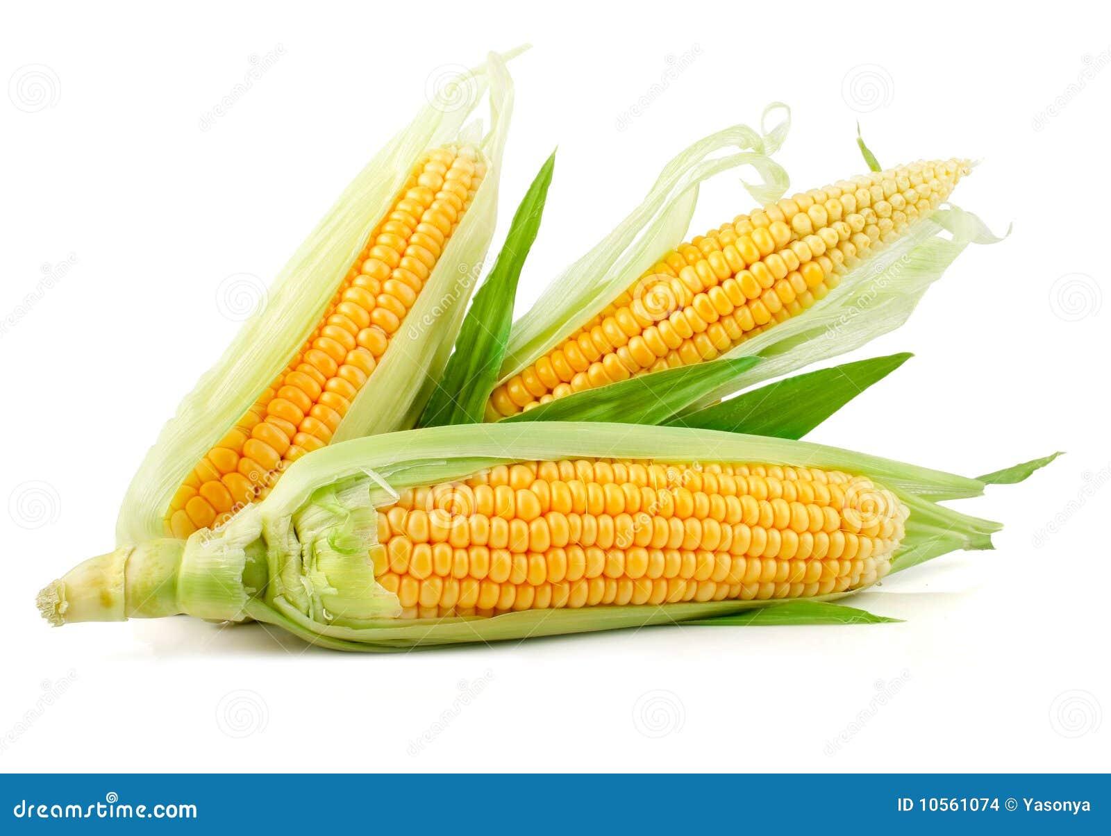Liść kukurydzany świeży zielony warzywo