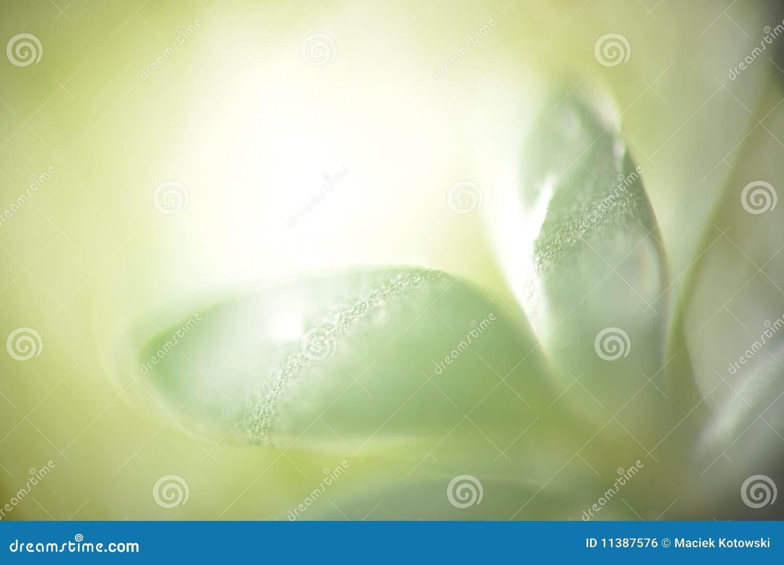 Liść zielony macro