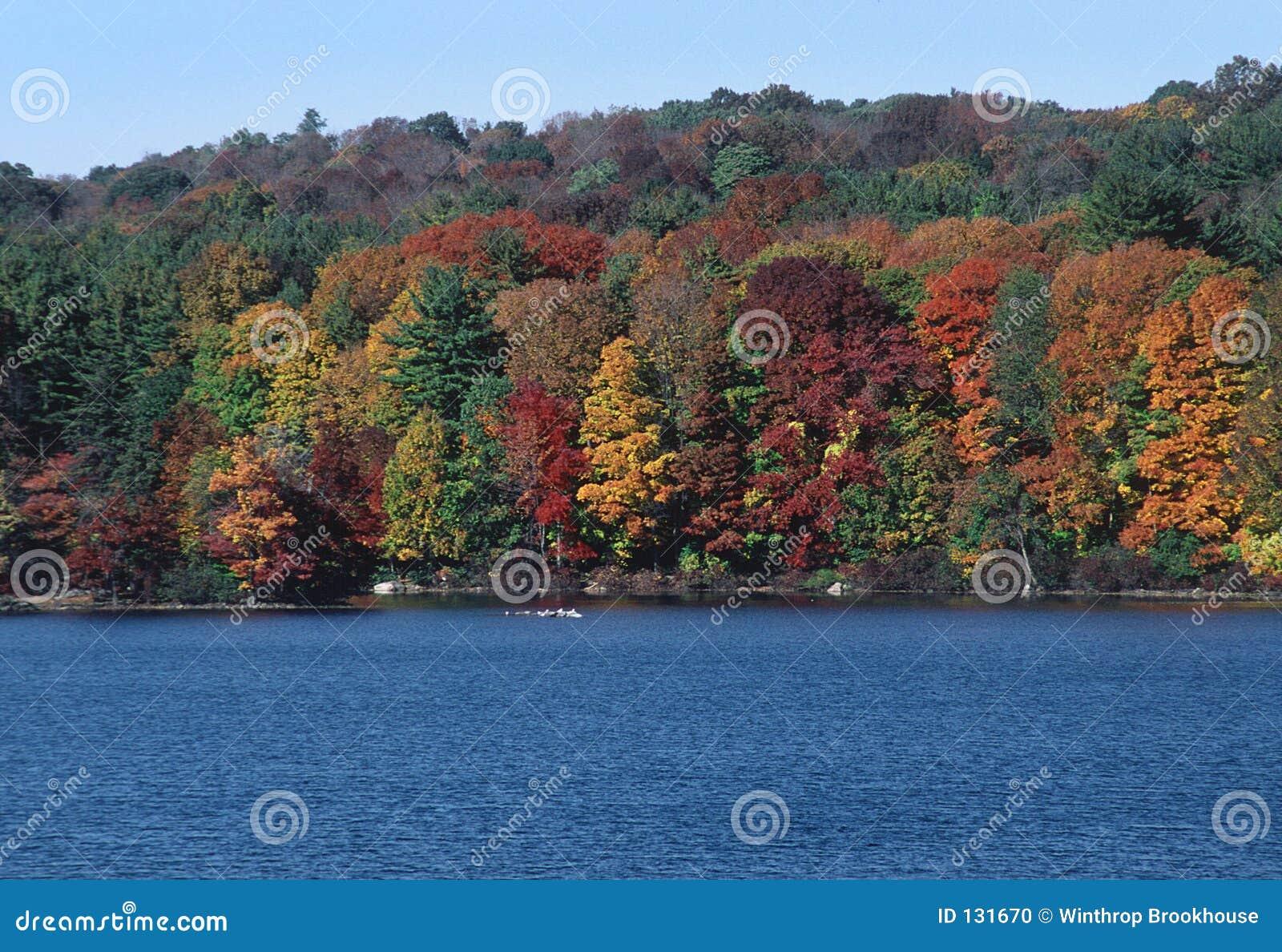 Liści jesienią drzewa