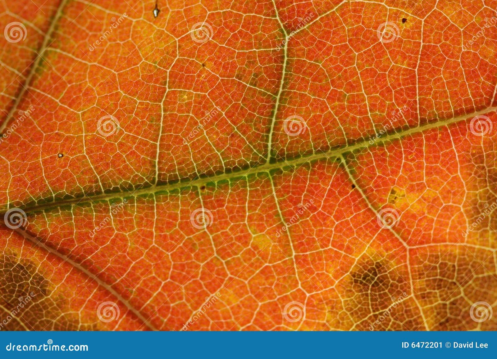 Liści jesienią tła