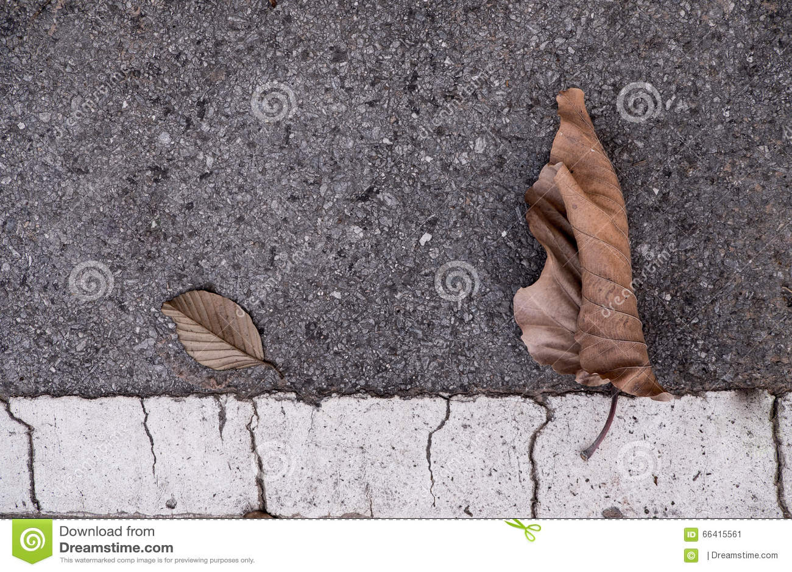 Liścia cement