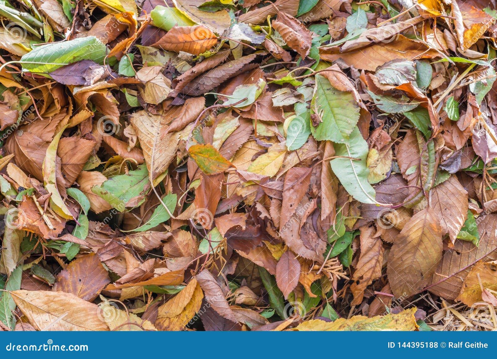 Liścia stos jako jesienny tło lub tekstura