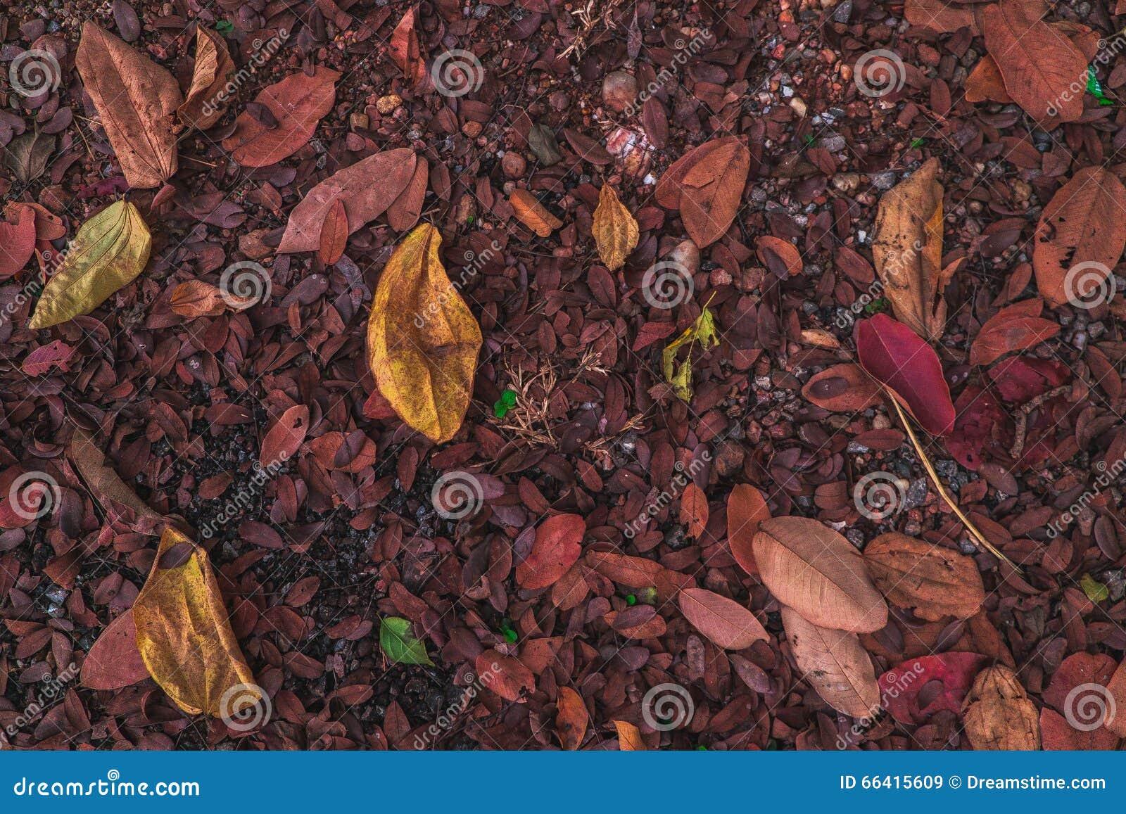 Liścia stos na podłoga