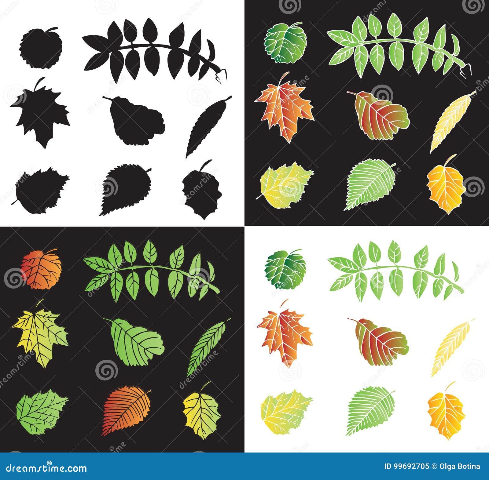 Liście drzewo kolor i sylwetki