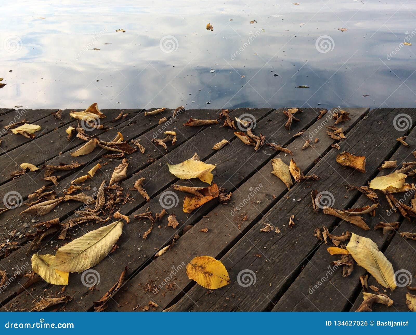 Liście i jezioro