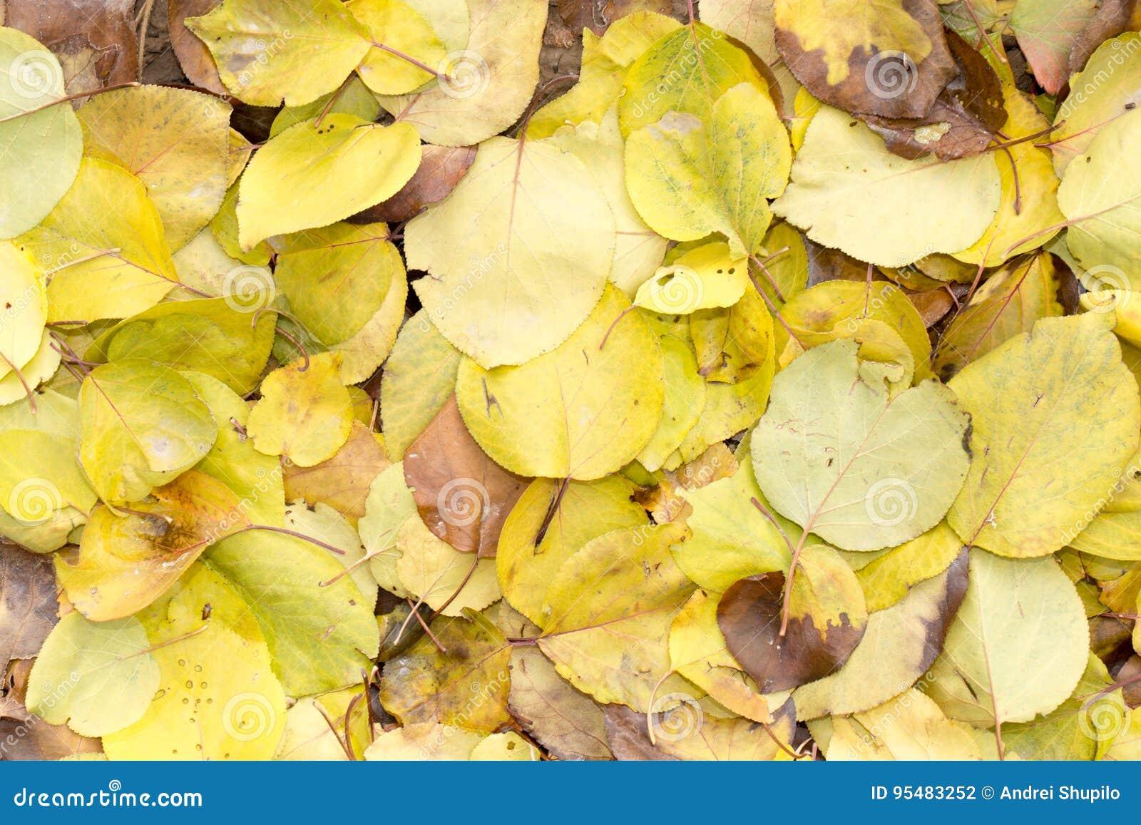 Liście jesień jako tło