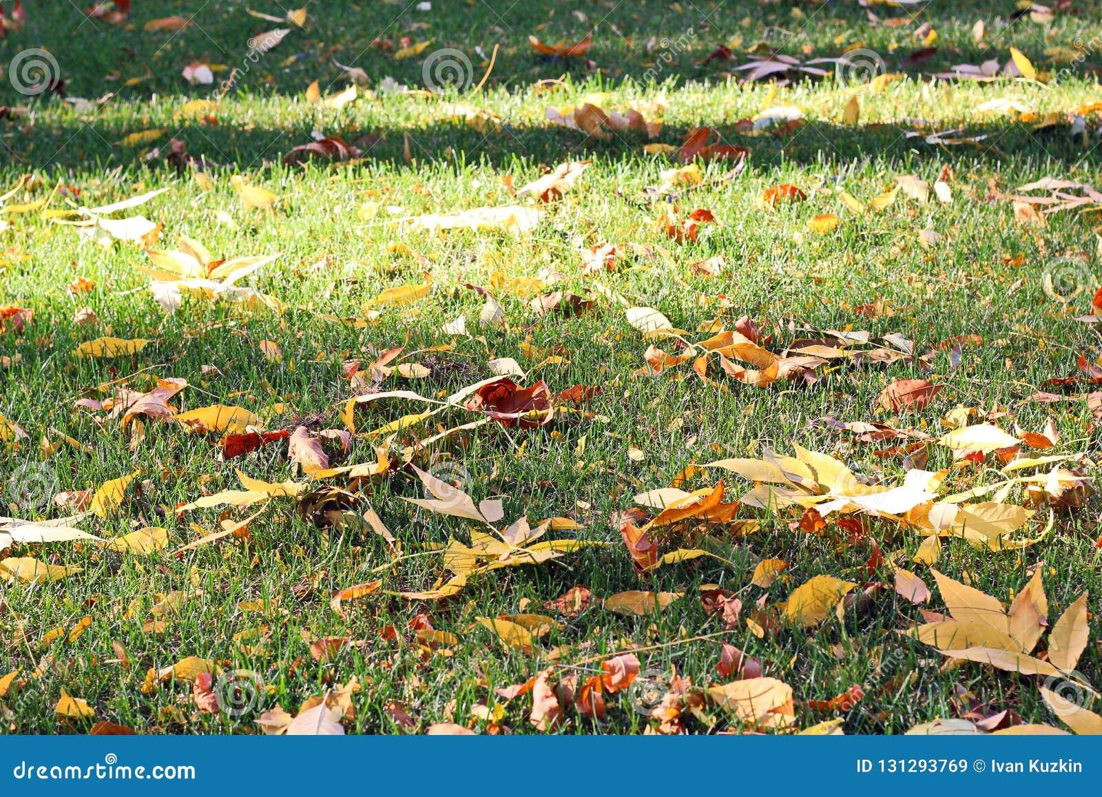 Liście na ziemi w jesieni jako tło