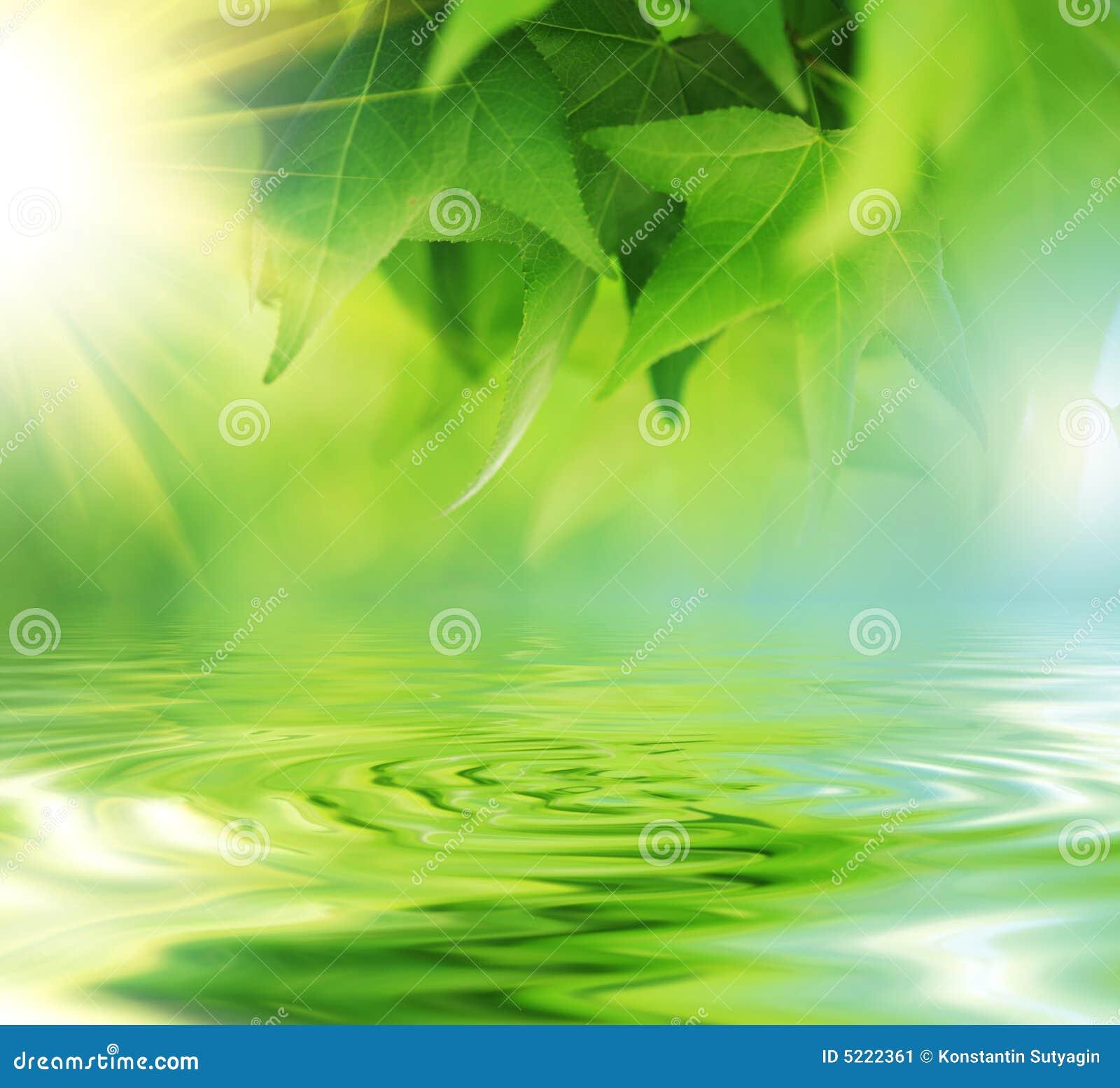 Liście nad wodą