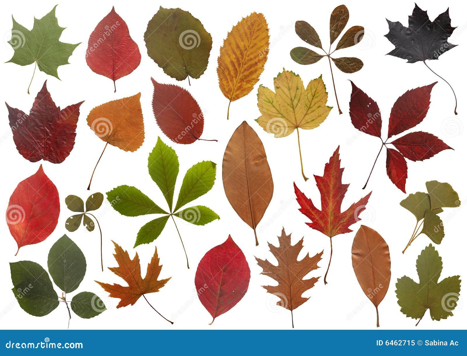 Liście ustawione jesieni