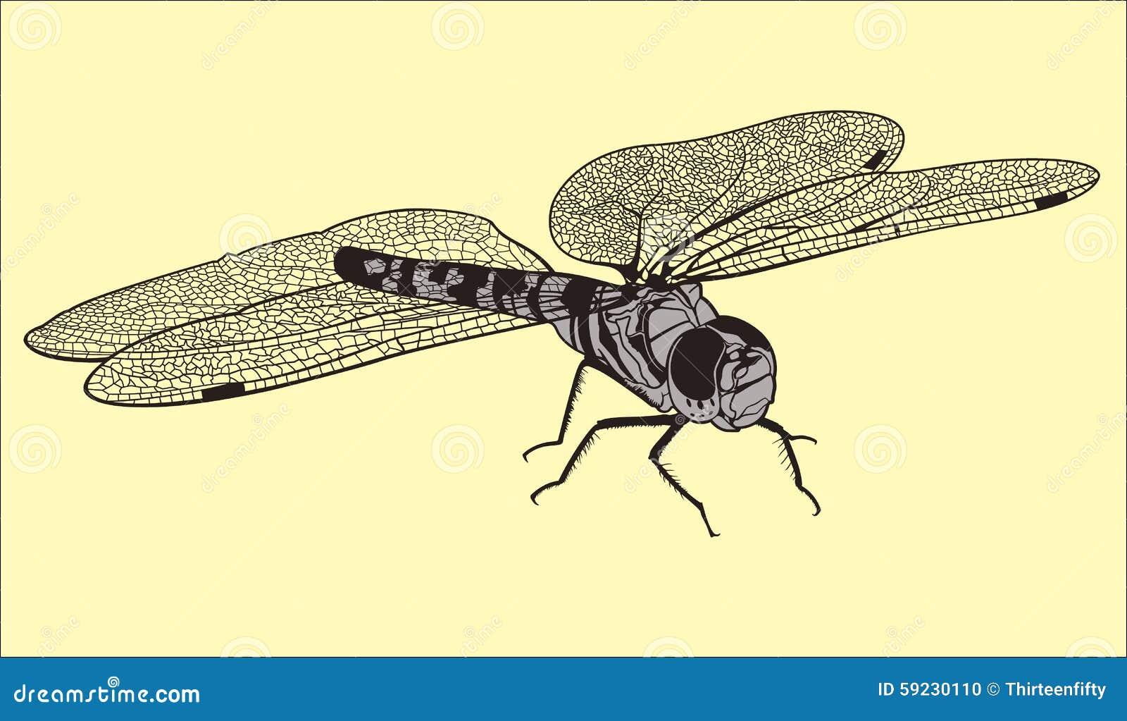Download Libélula ilustración del vector. Ilustración de vuelo - 59230110
