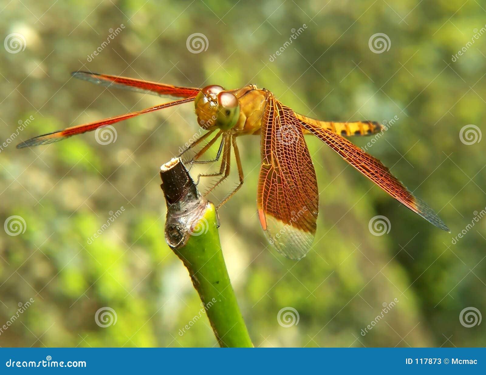 Libelle auf Kabel