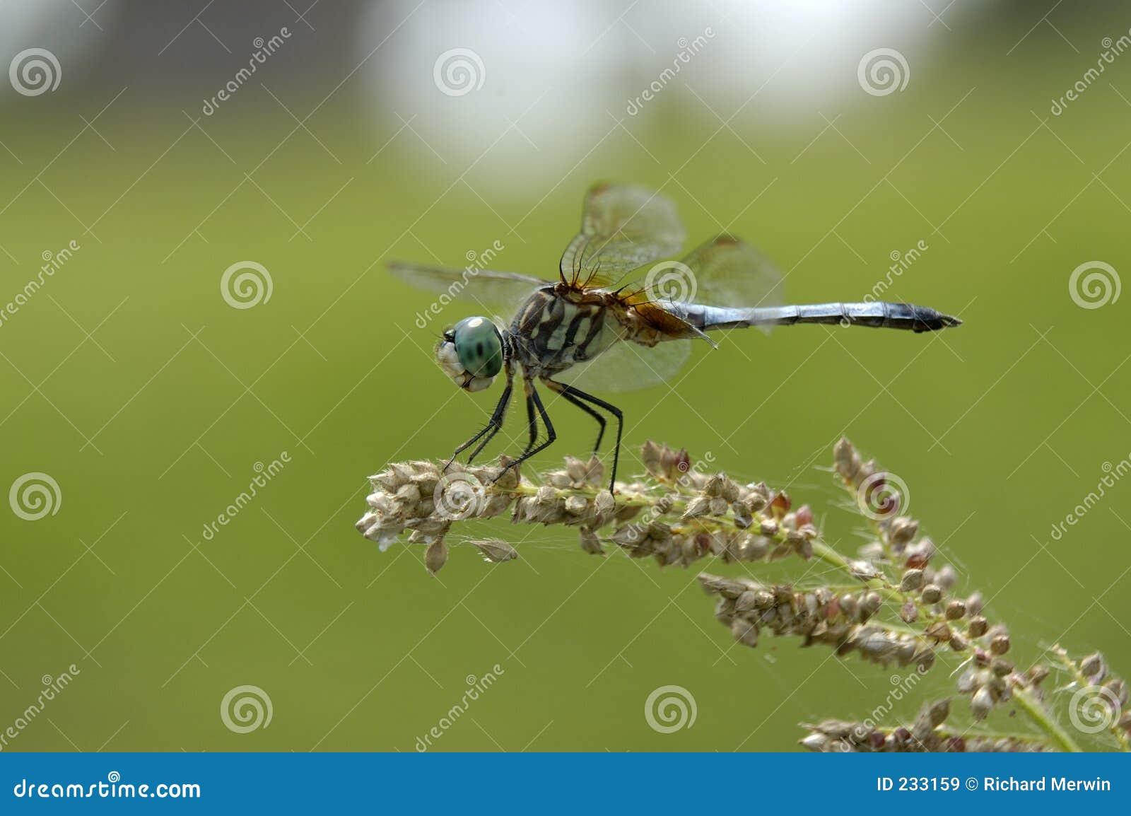 Libelle und Startwerte für Zufallsgenerator