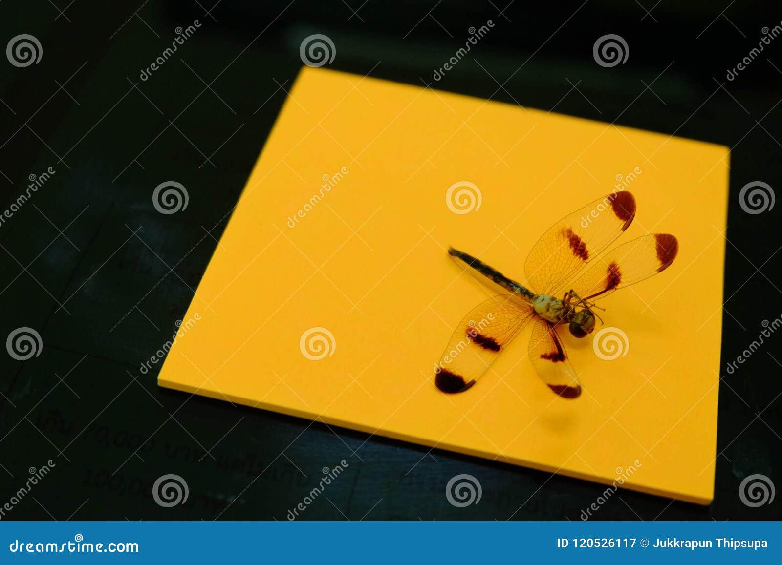 Libellula morta sulla carta e sul nero arancio di fondo