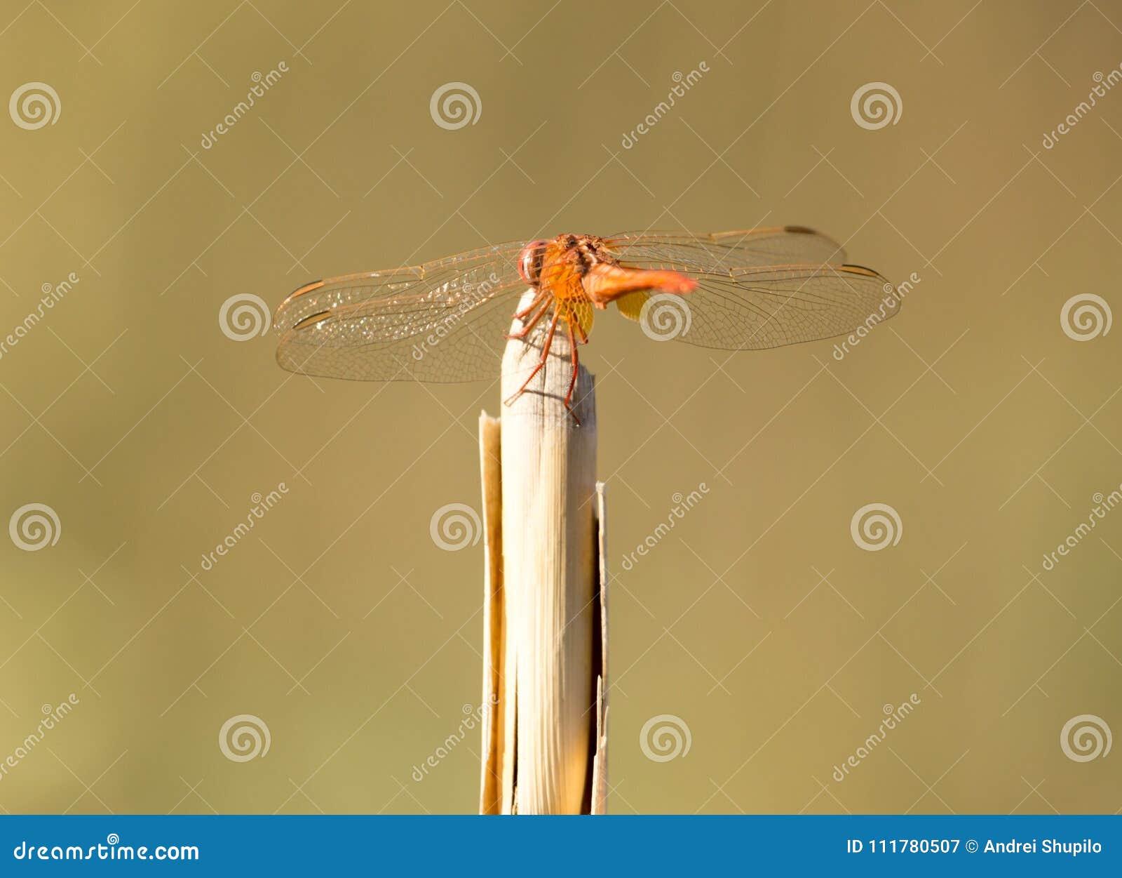 Libellule sur un bâton dehors