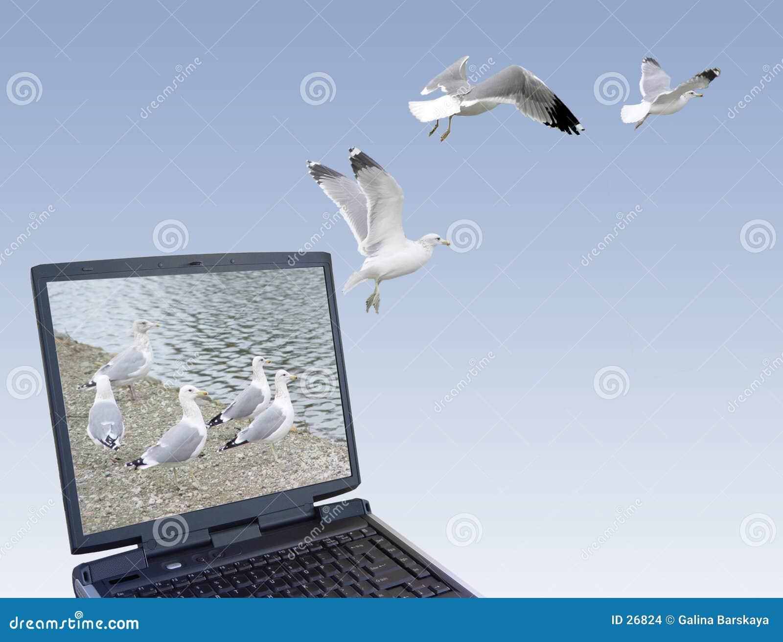 Download Libertad foto de archivo. Imagen de oficina, gaviota, ordenador - 26824