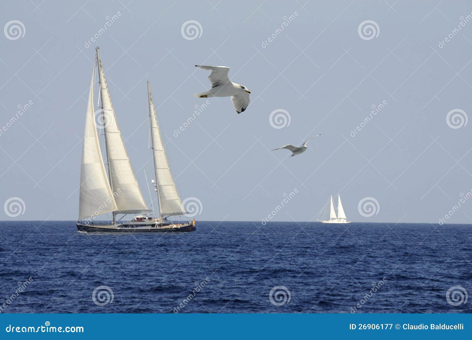 Libertad en el viento