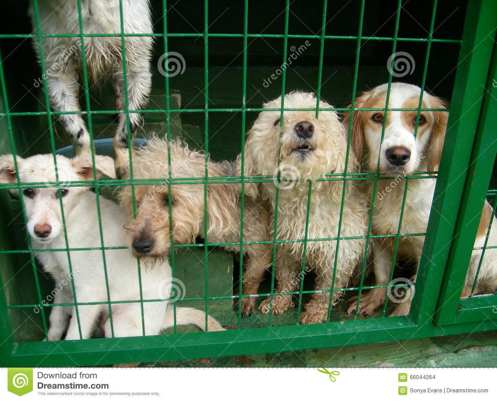 Libra de cão