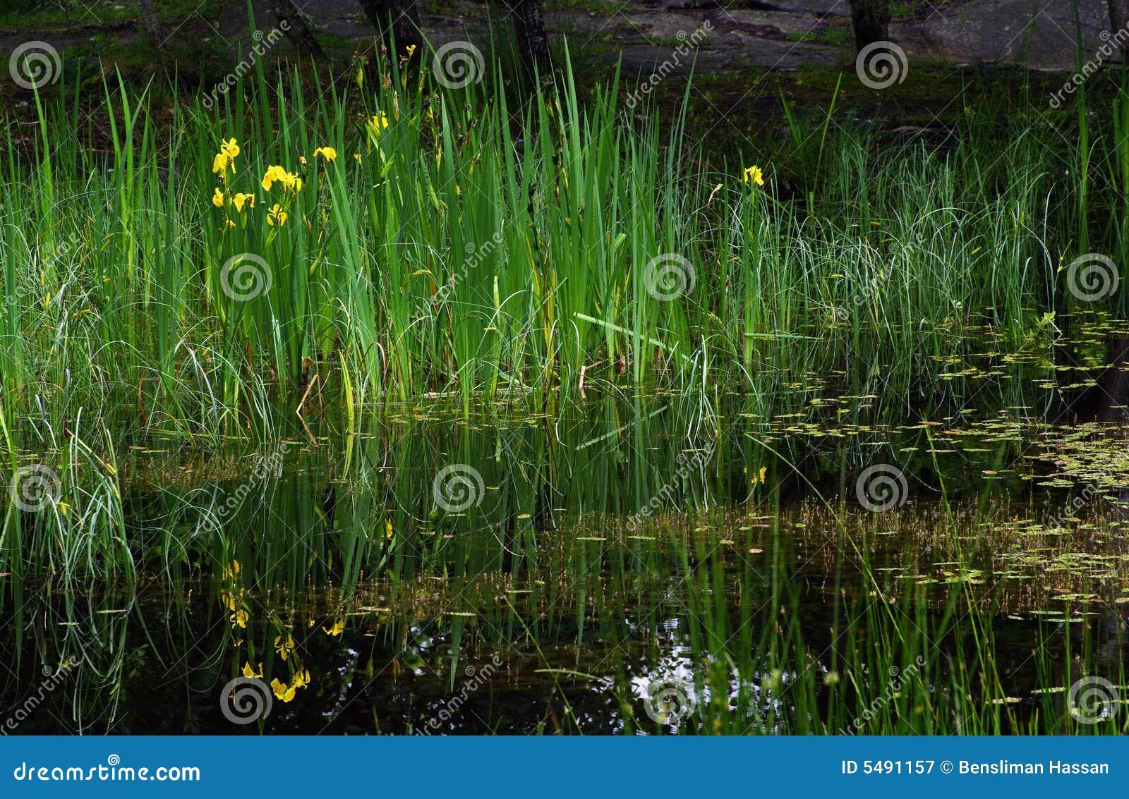 Libra en el bosque de Fontainebleau