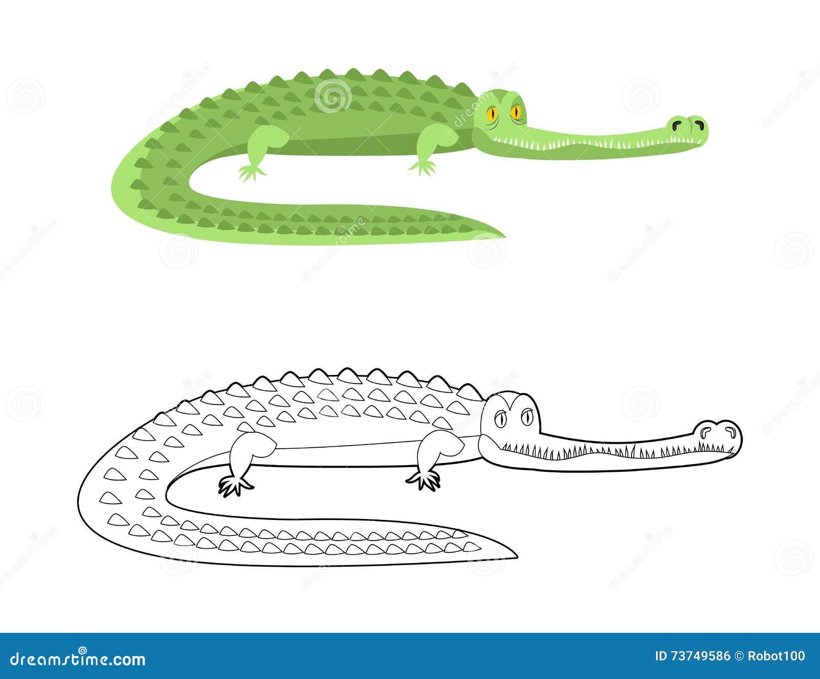 Libro Da Colorare Del Coccodrillo Buon Caimano Animale Selvatico