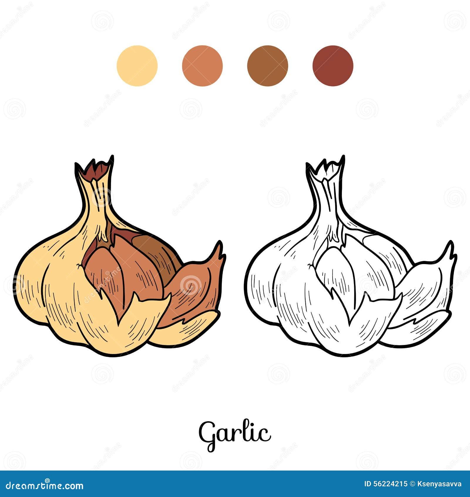 Libro da colorare frutta e verdure aglio illustrazione - Colorare le pagine di verdure ...