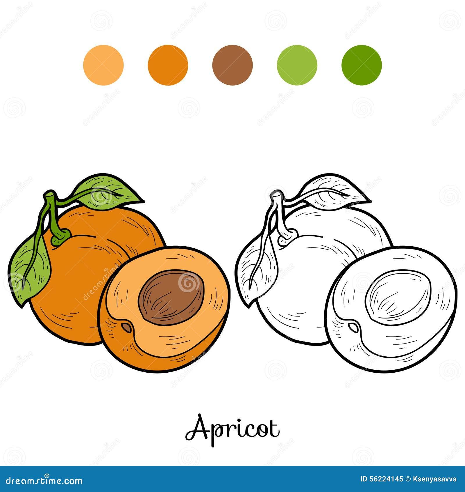Libro da colorare frutta e verdure albicocca - Colorare le pagine di verdure ...