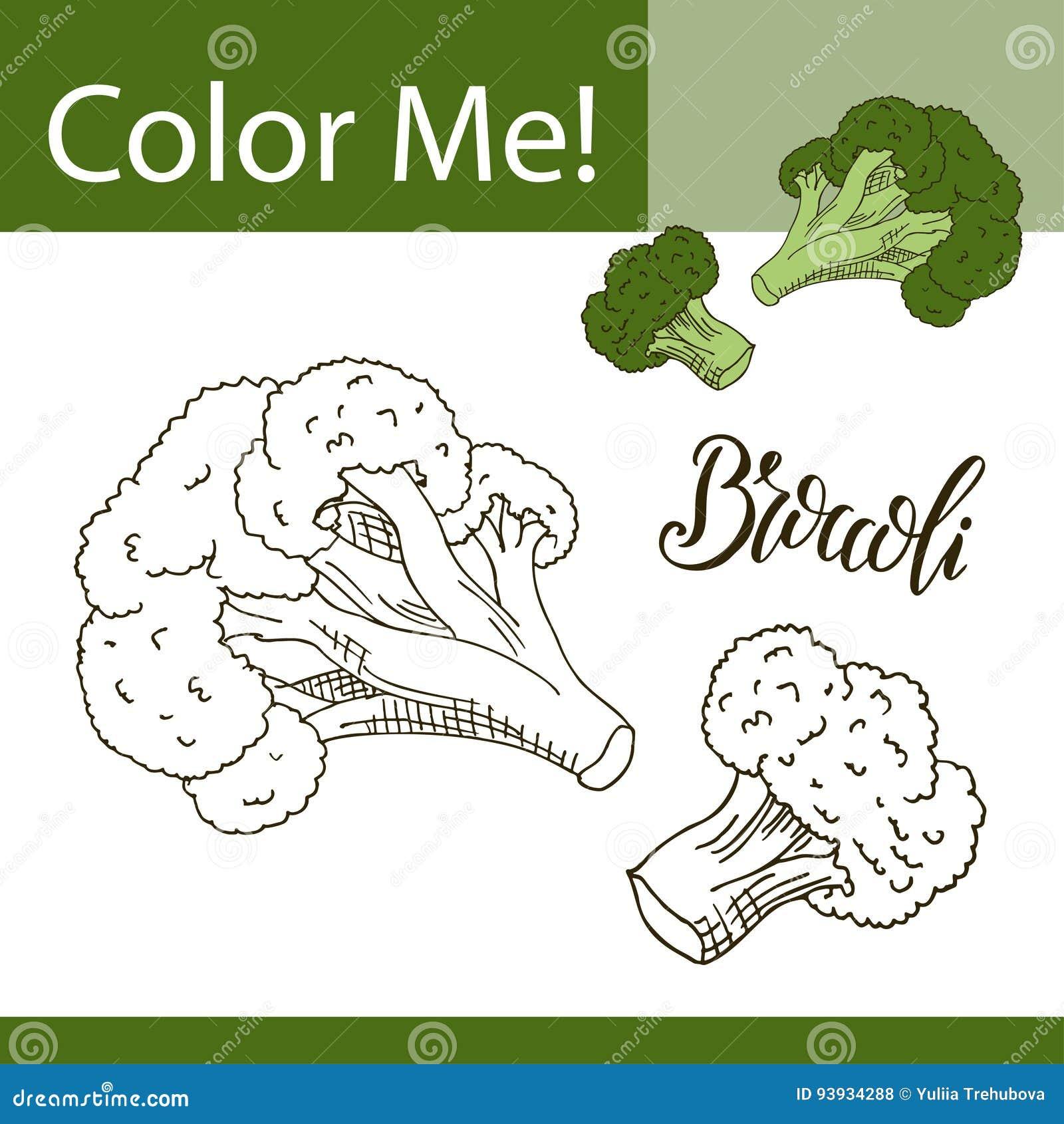Libro Da Colorare O Pagina Della Verdura Illustrazione Di Vettore