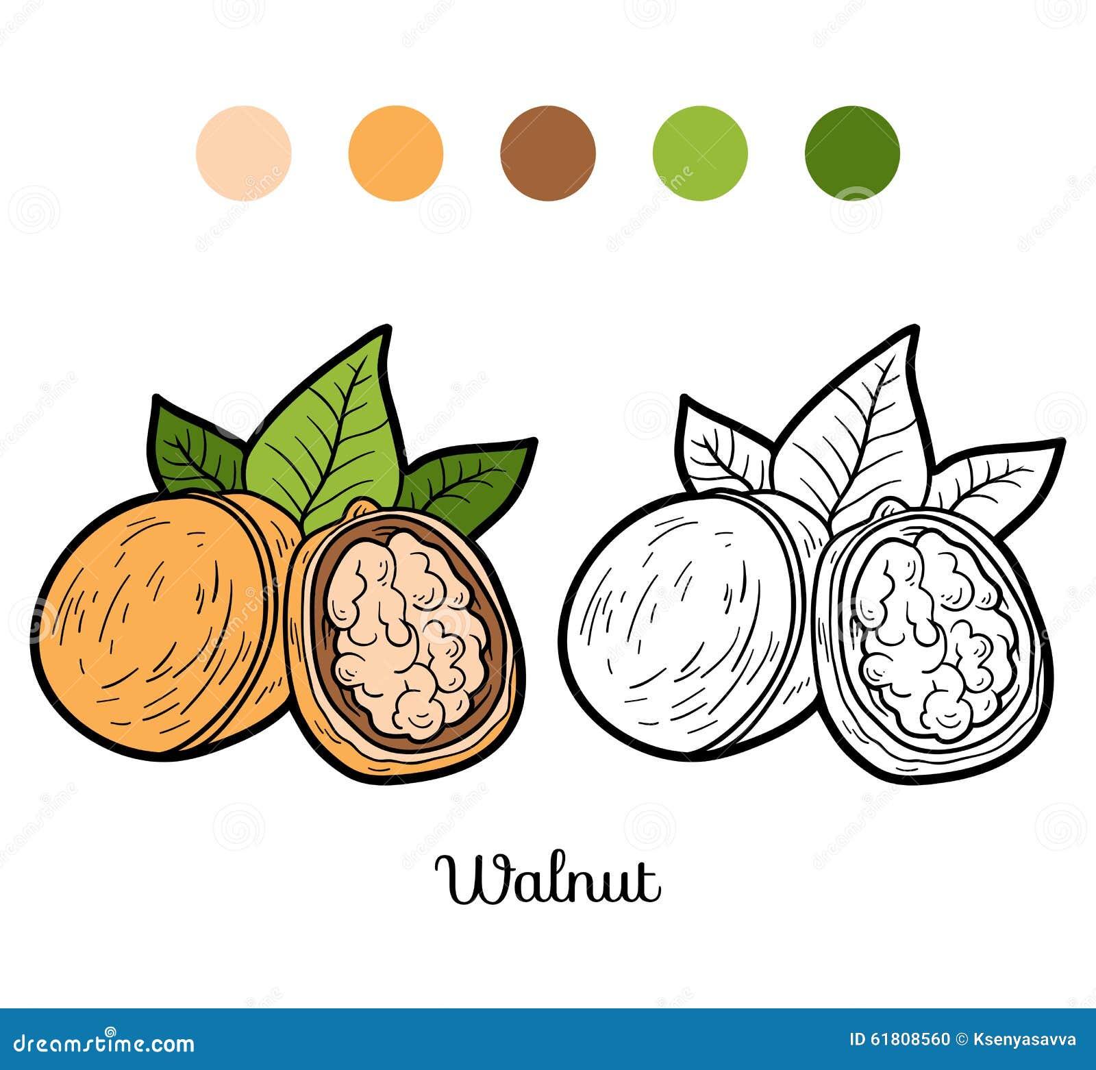 Libro da colorare per i bambini frutta e verdure noce - Colorare le pagine di verdure ...