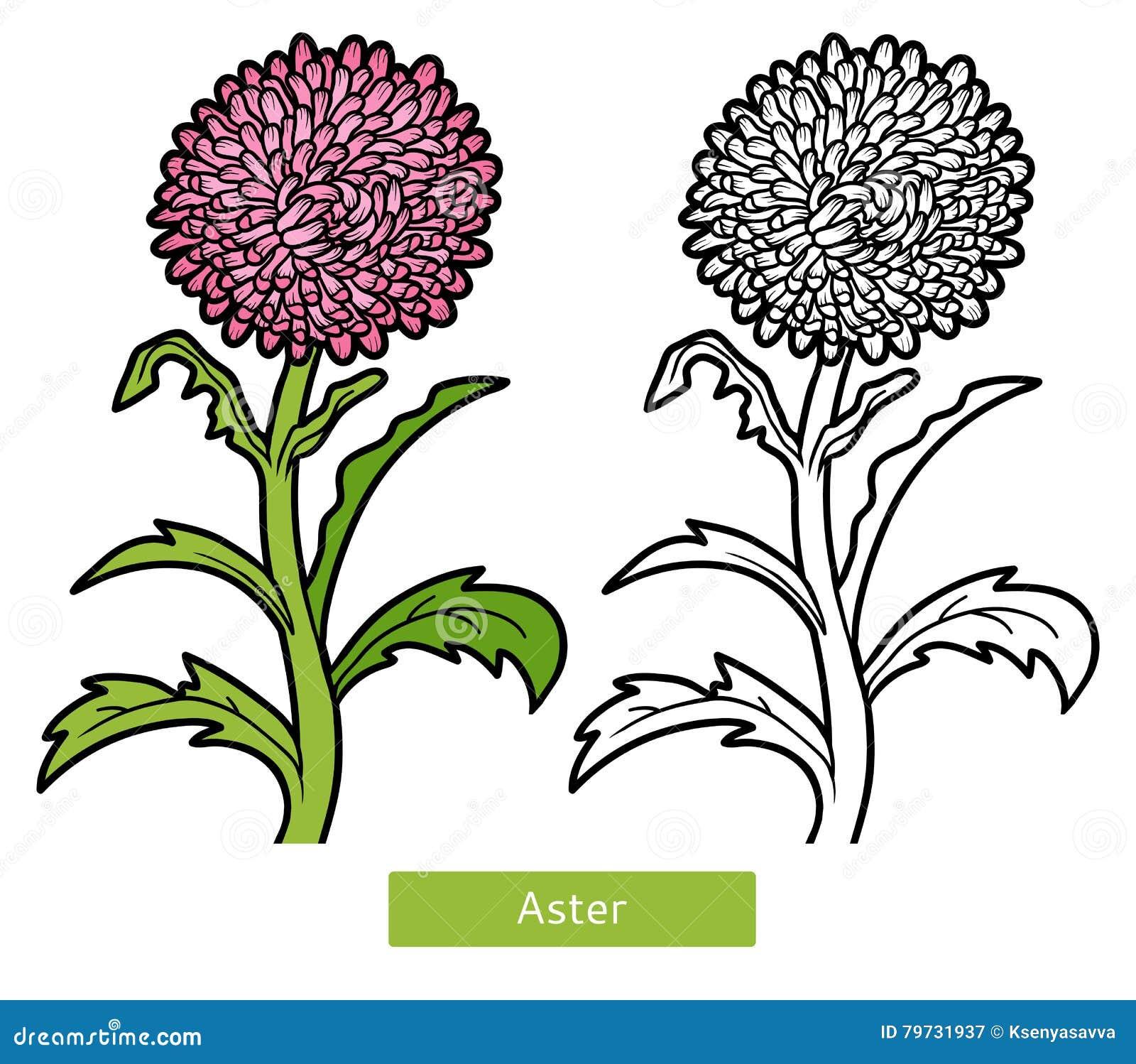 Libro de colorear, aster de la flor