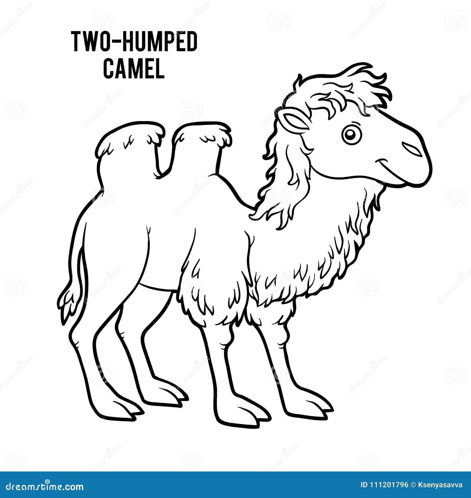 Libro De Colorear, Camello Two-humped Ilustración del Vector ...