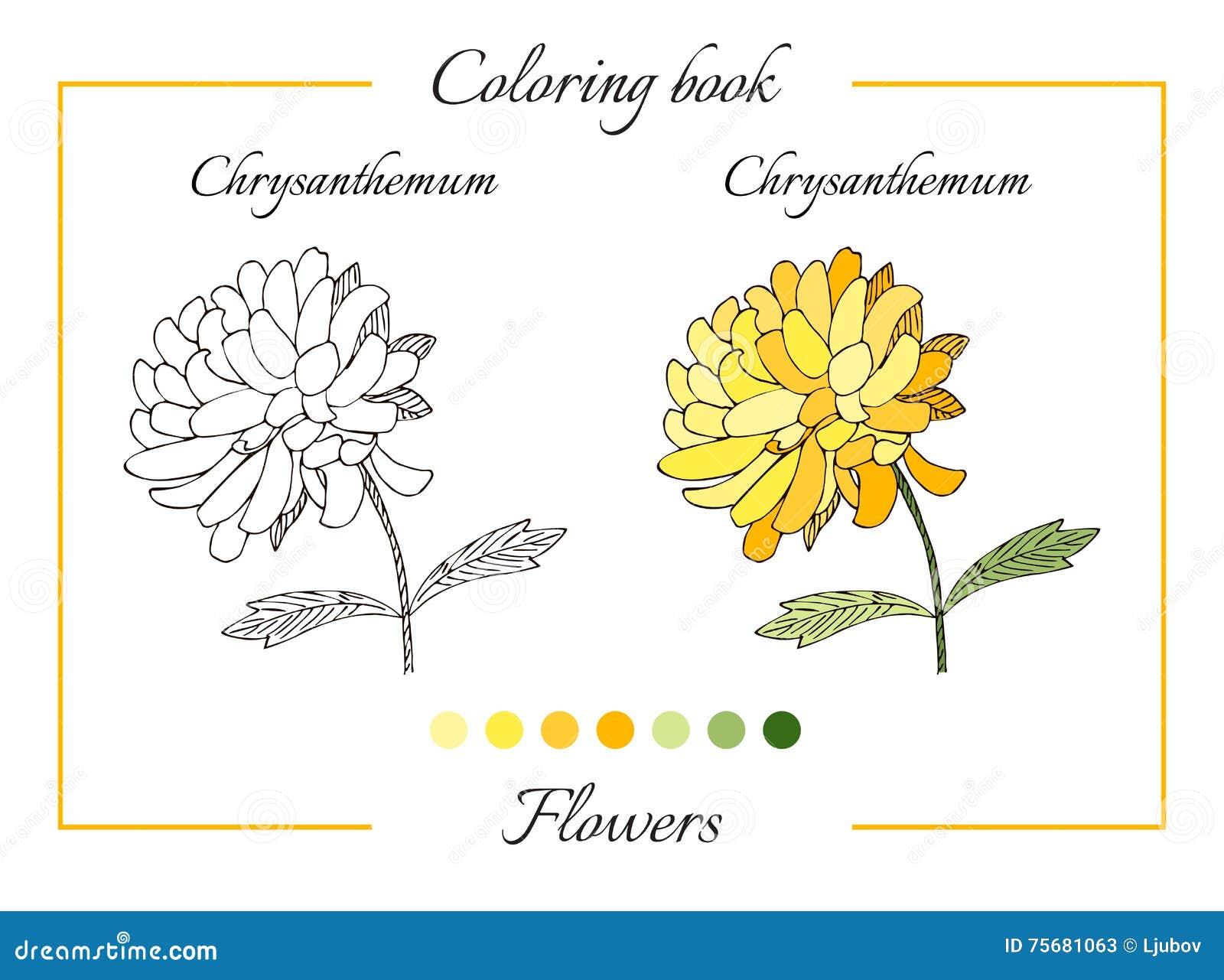 Libro De Colorear Con La Flor Hermosa Del Crisantemo Ilustración del ...