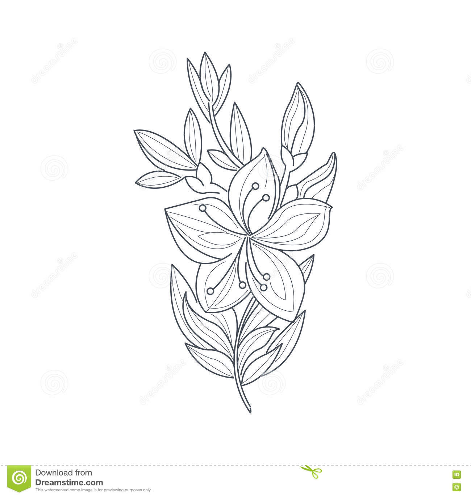 Libro De Colorear De Jasmine Flower Monochrome Drawing For ...