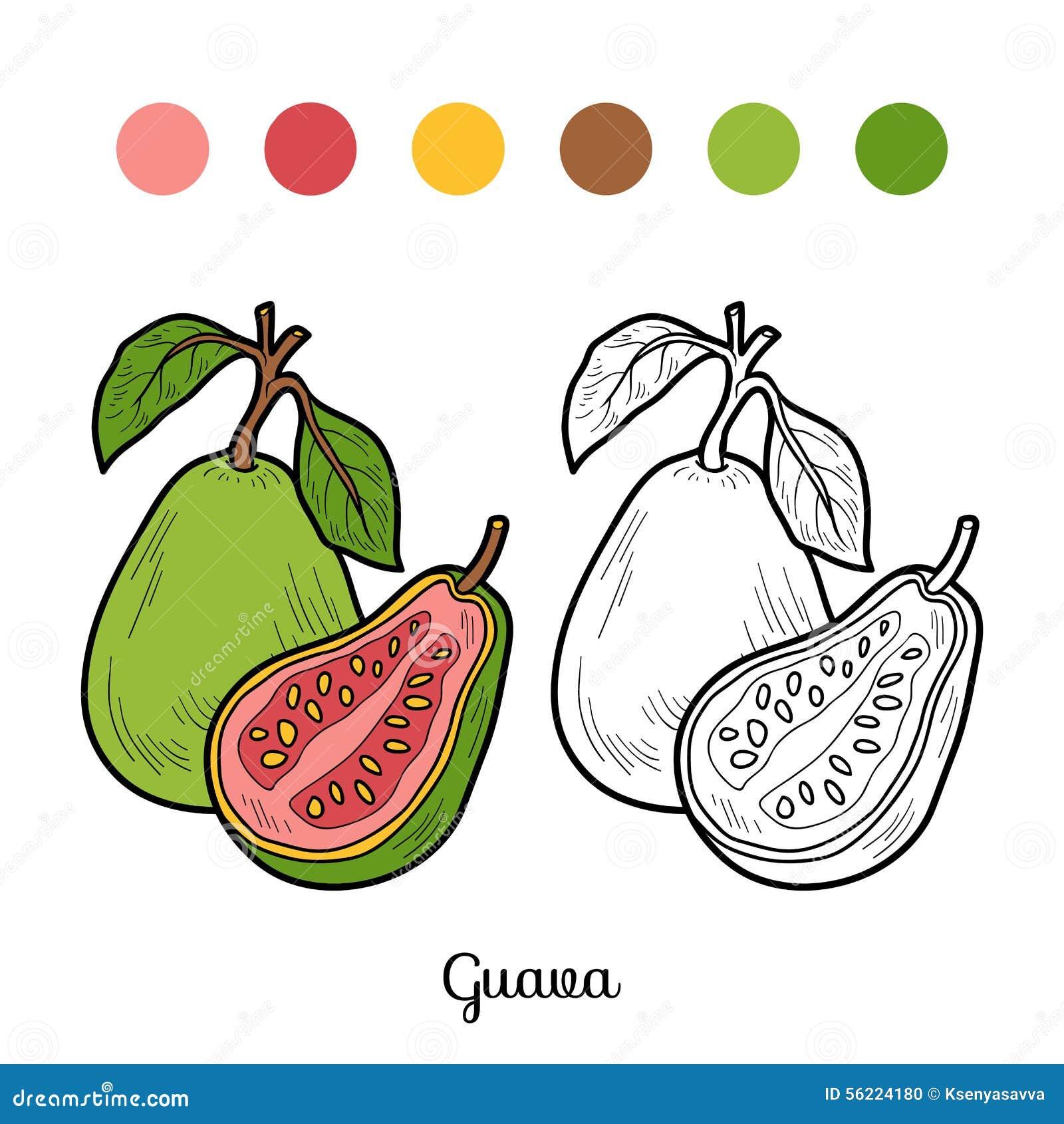 Libro De Colorear Frutas Y Verduras Guayaba Ilustración