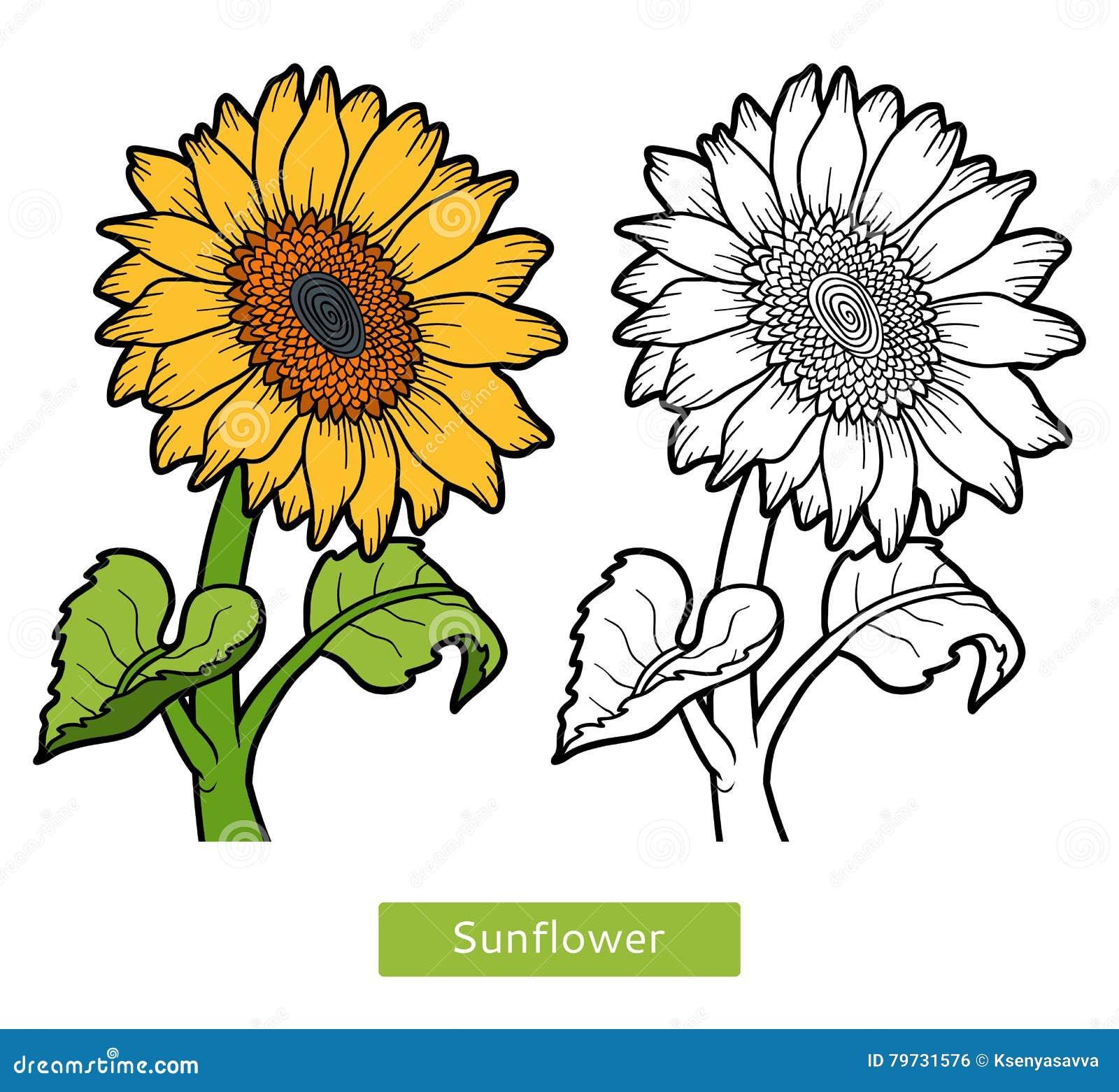 Libro De Colorear Girasol De La Flor Ilustración Del Vector