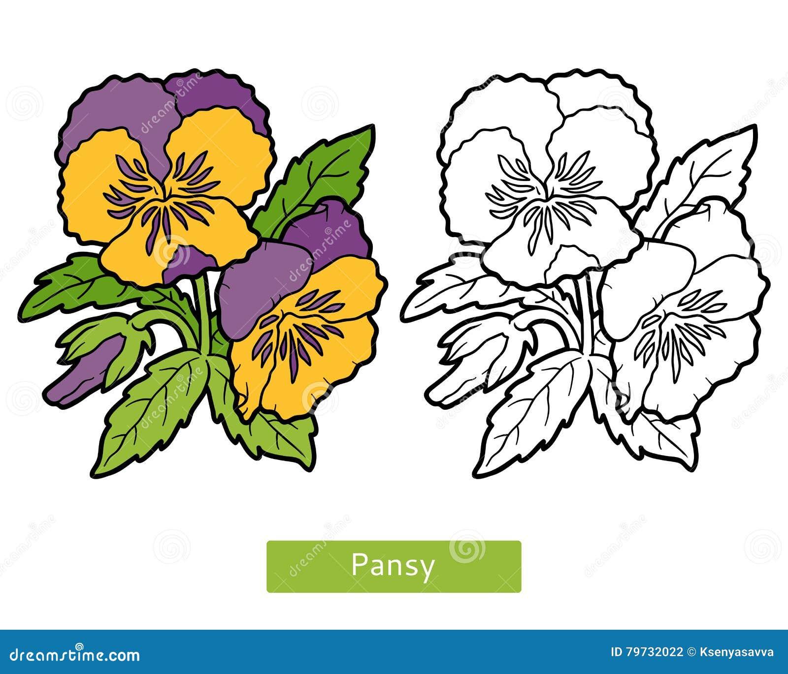 Libro de colorear, pensamiento de la flor