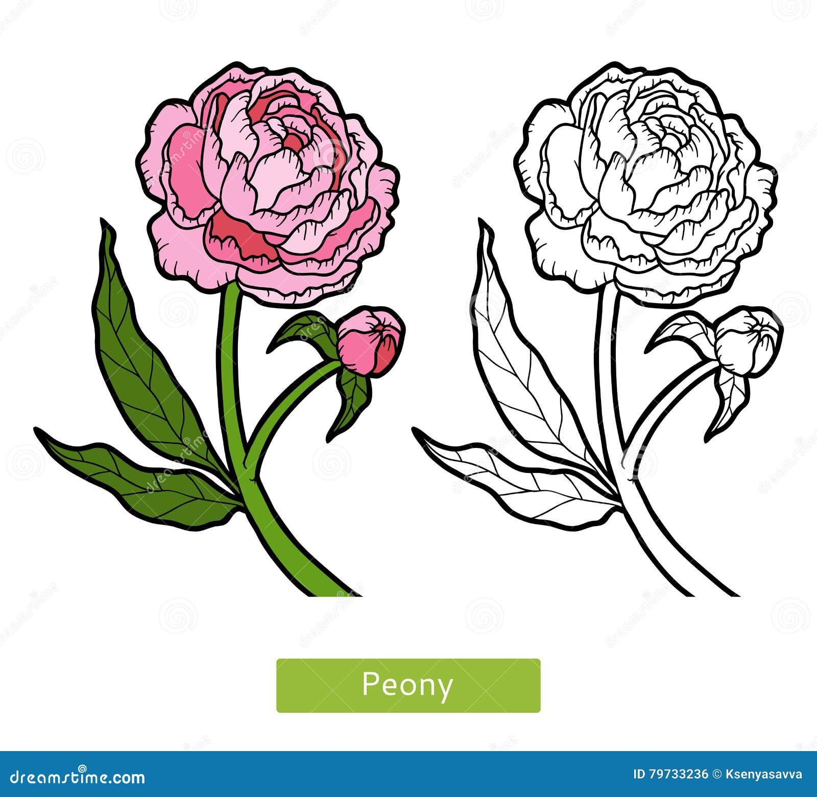 Libro de colorear, peonía de la flor