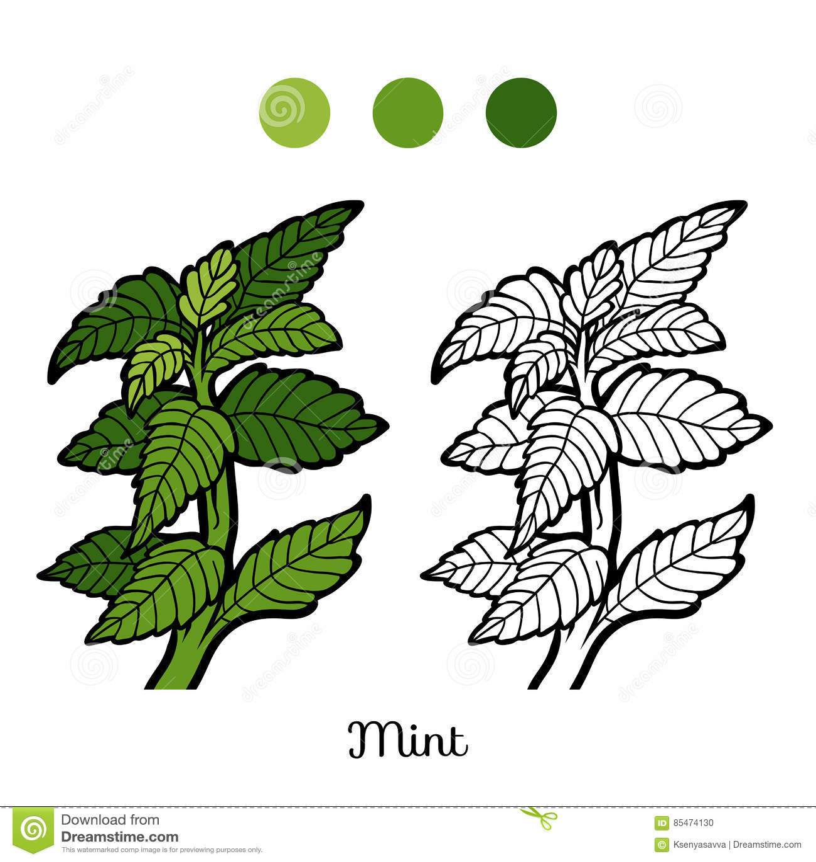 Libro De Colorear, Planta, Menta Ilustración del Vector ...
